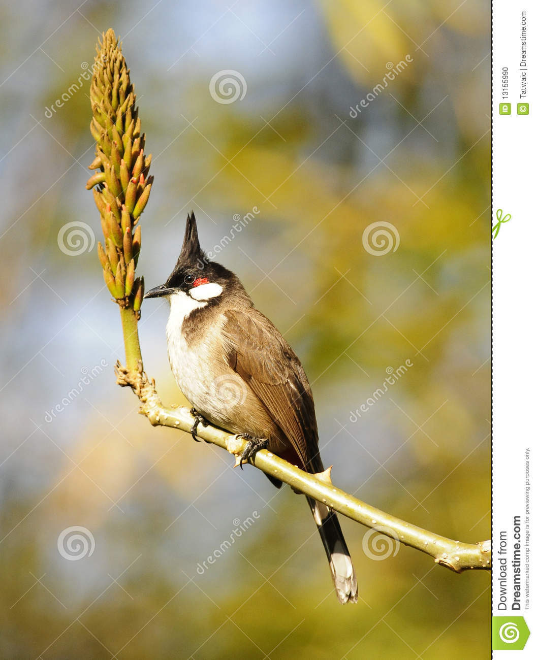 Bird with a strange hairstyle looks like the shape of the branch Ceremony shoes bride rings hairstyles groom click share love