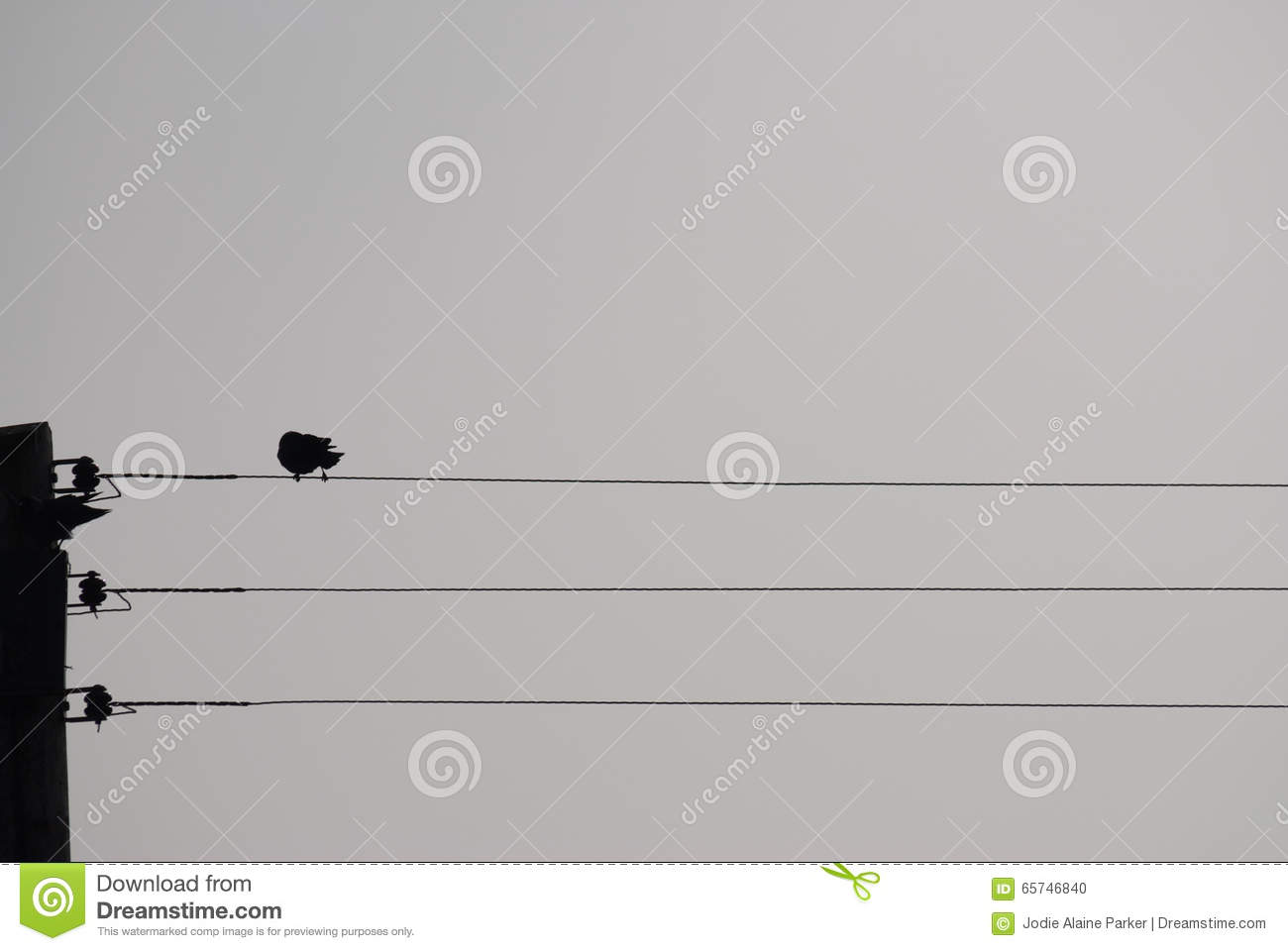 Bird On A Telephone Wire Silhouette Stock Photo - Image of nature ...