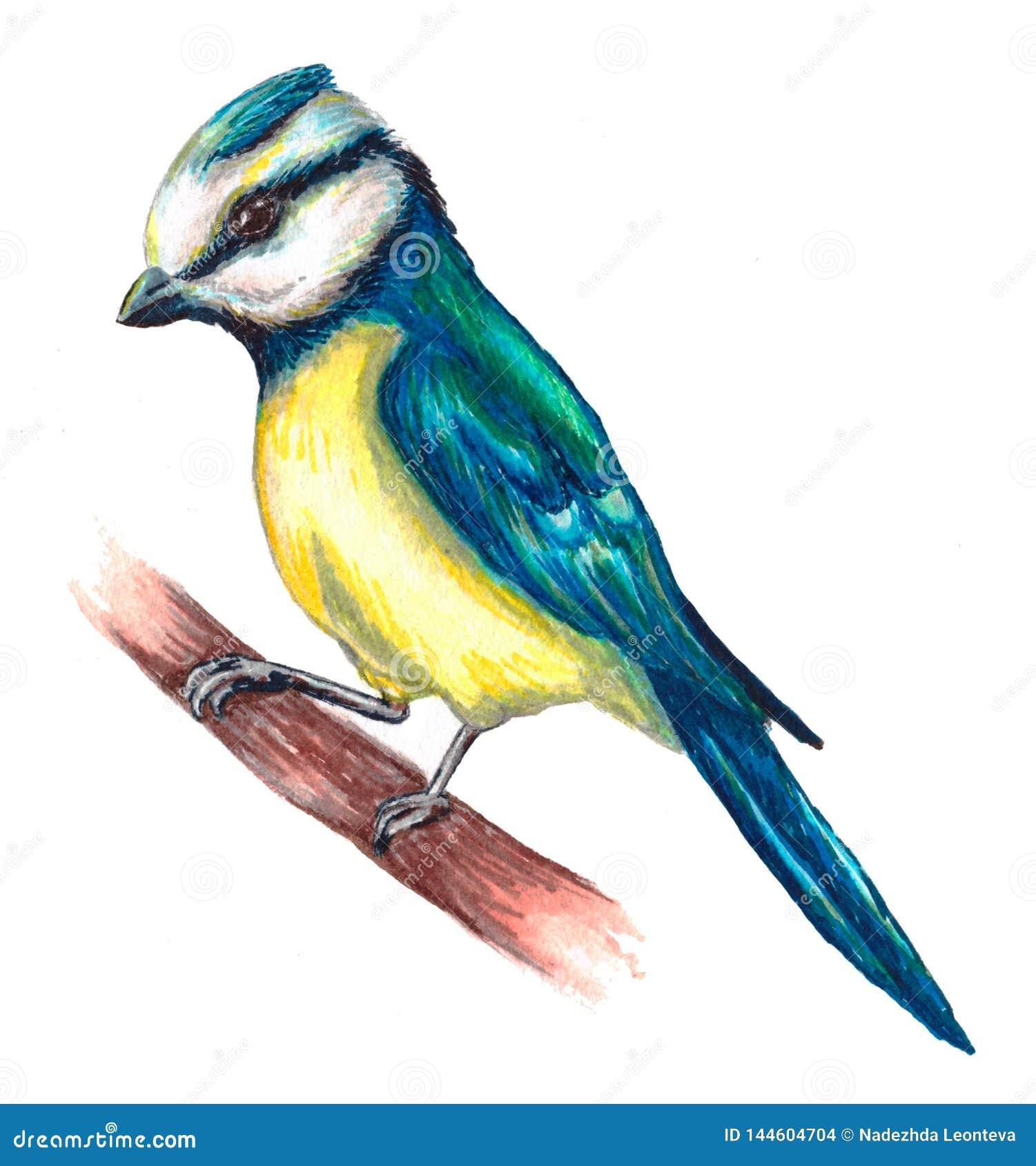Bird Titmouse On Tree Branch Stock Illustration
