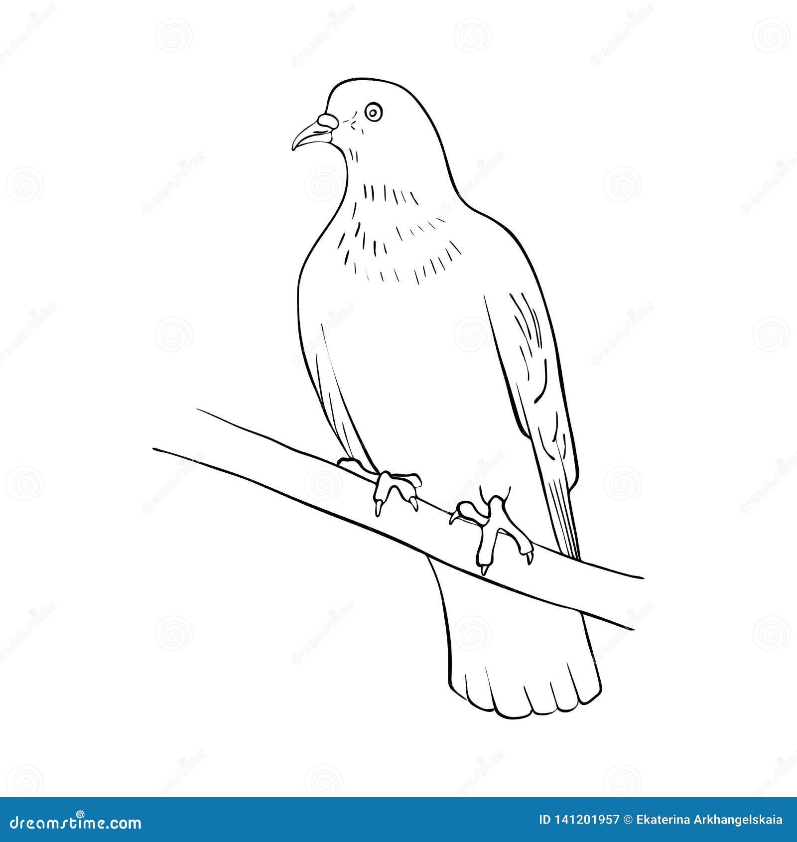 Bird at tree branch stock vector  Illustration of beak