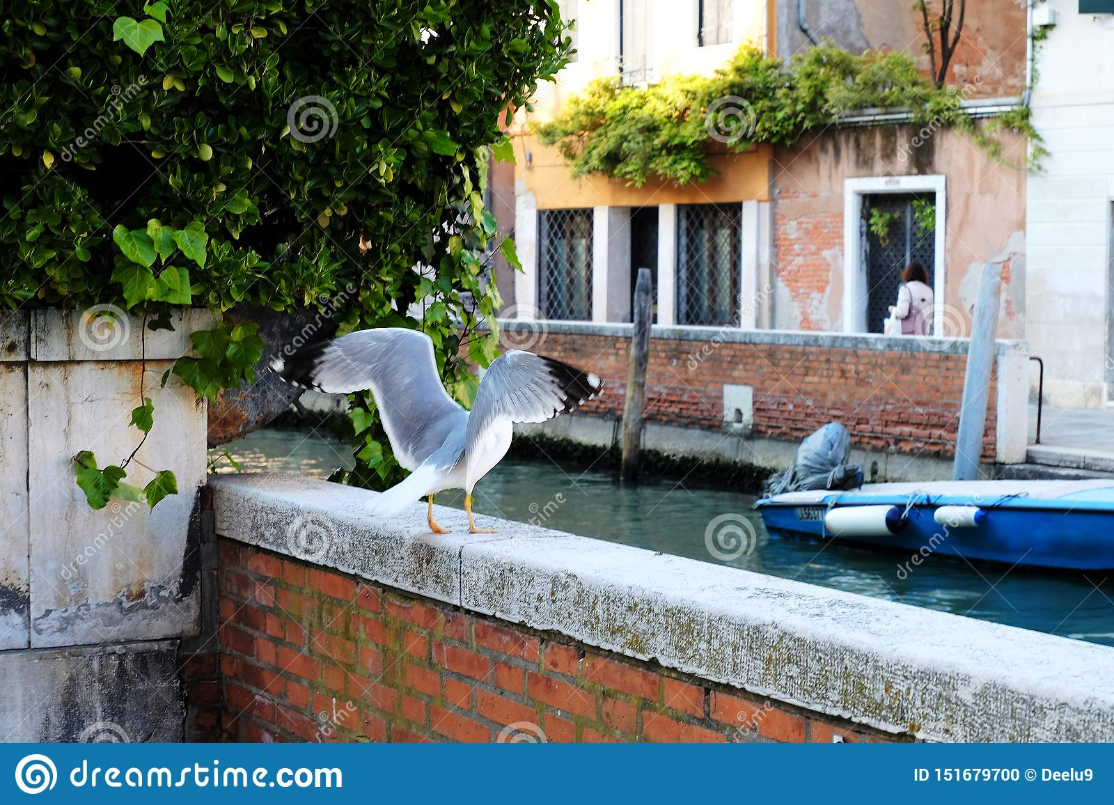 Bird in Venice, Italy getting up for a flight