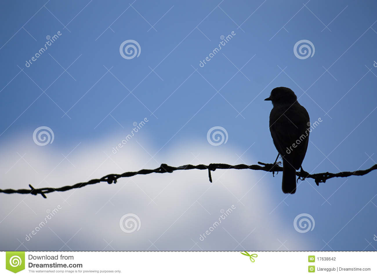 Bird on a wire stock photo. Image of wire, lighting, blues - 17638642