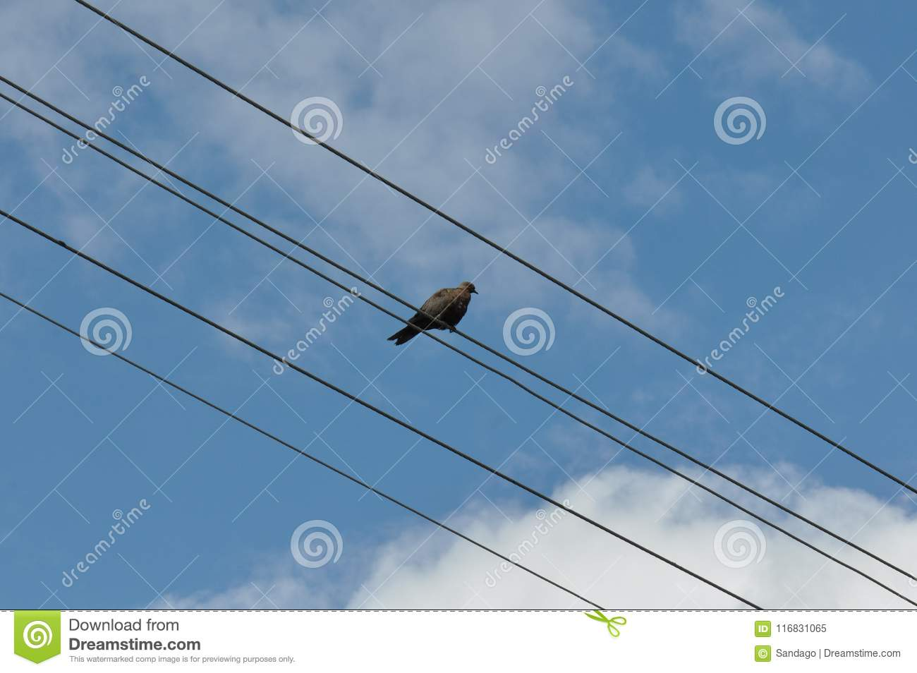 Bird on wire stock image. Image of finger, electric - 116831065