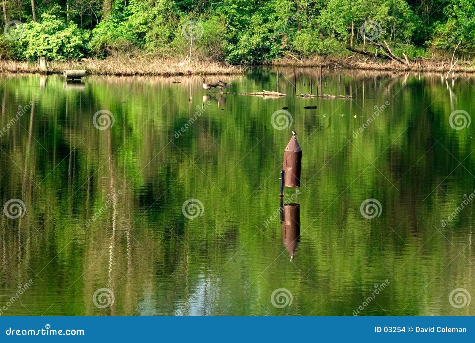 Birdhouse dans le lac