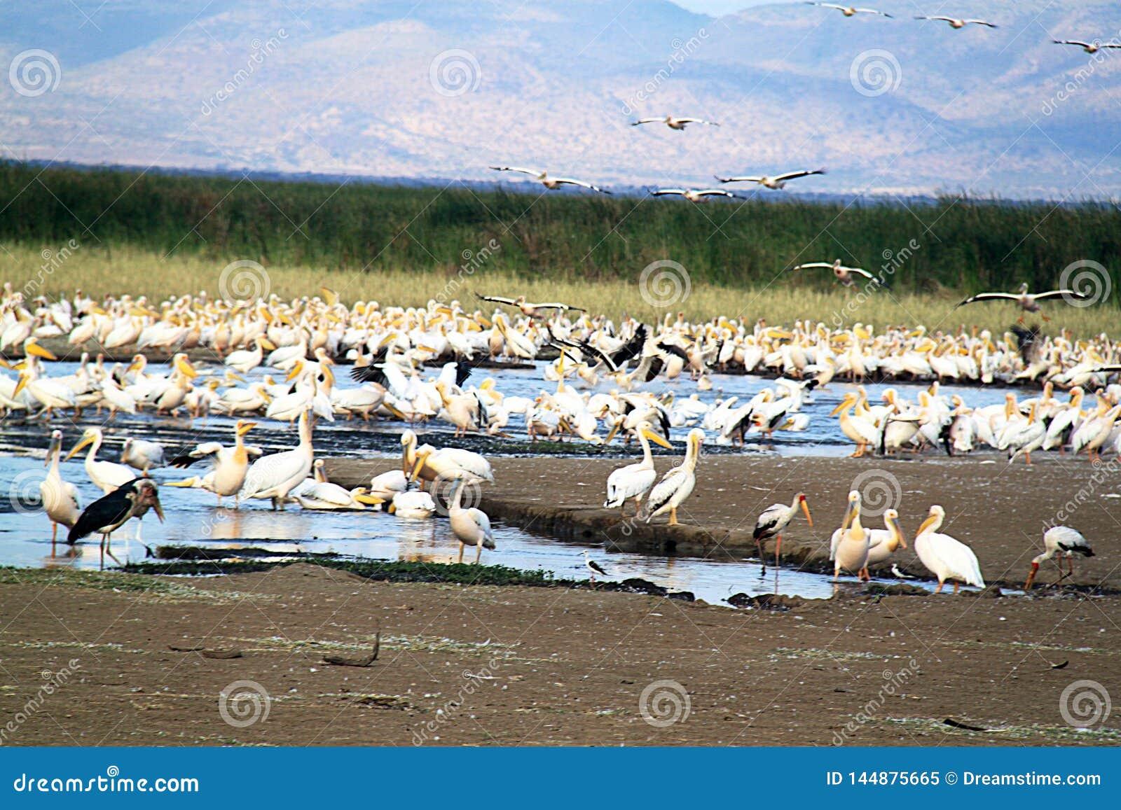 Birdlife in Tanzania