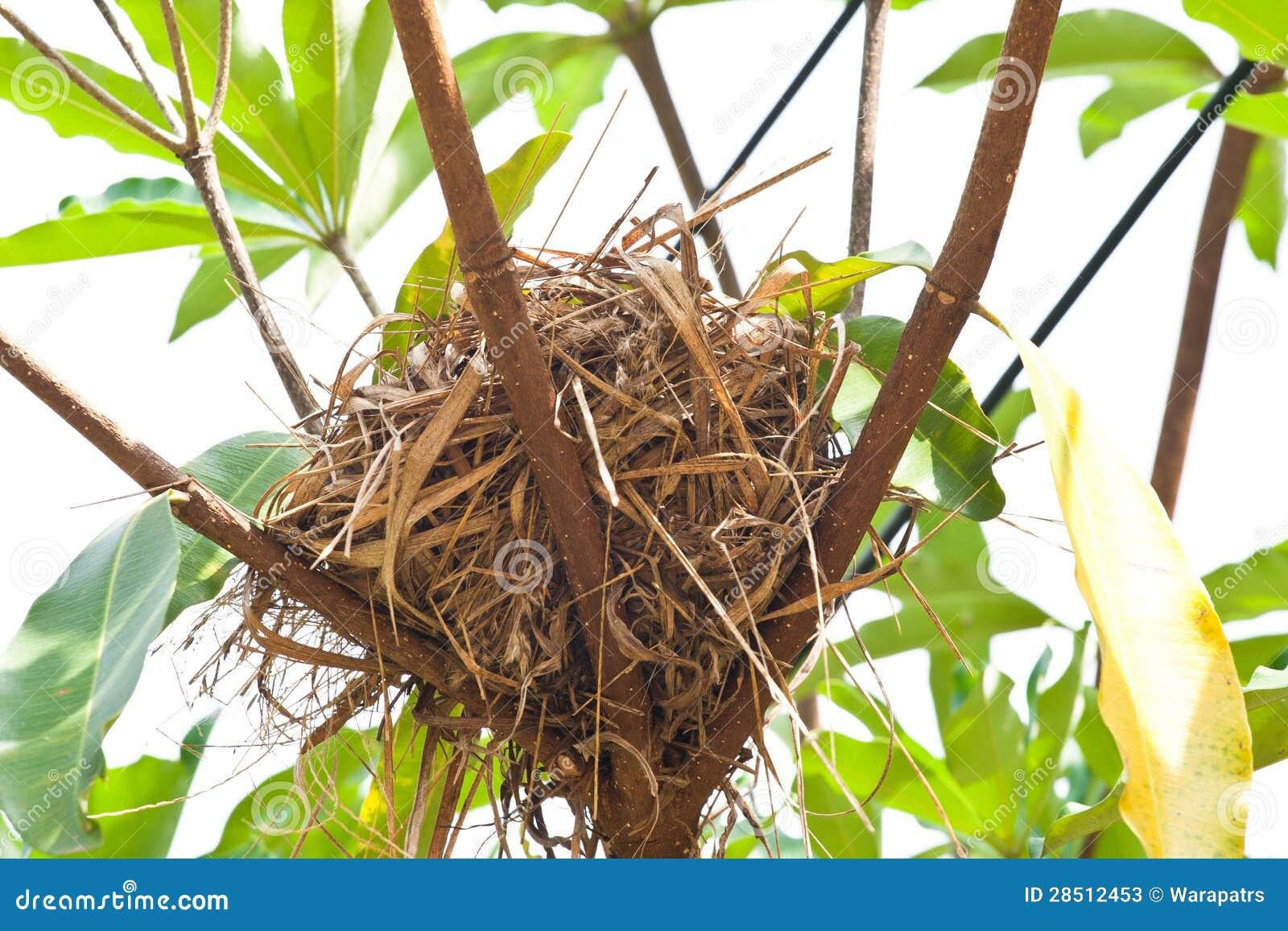 Birdnest en árbol