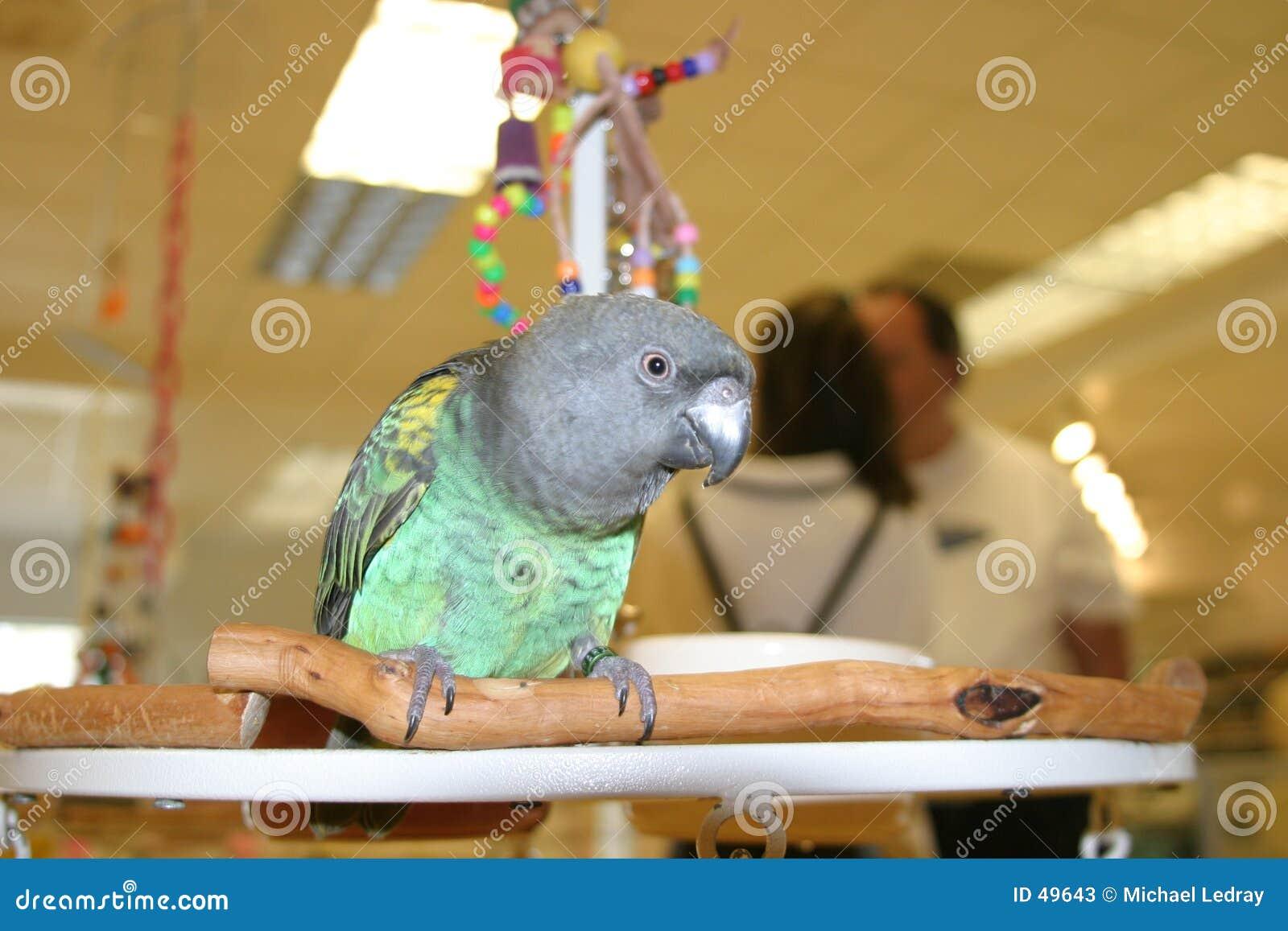 Birds #2