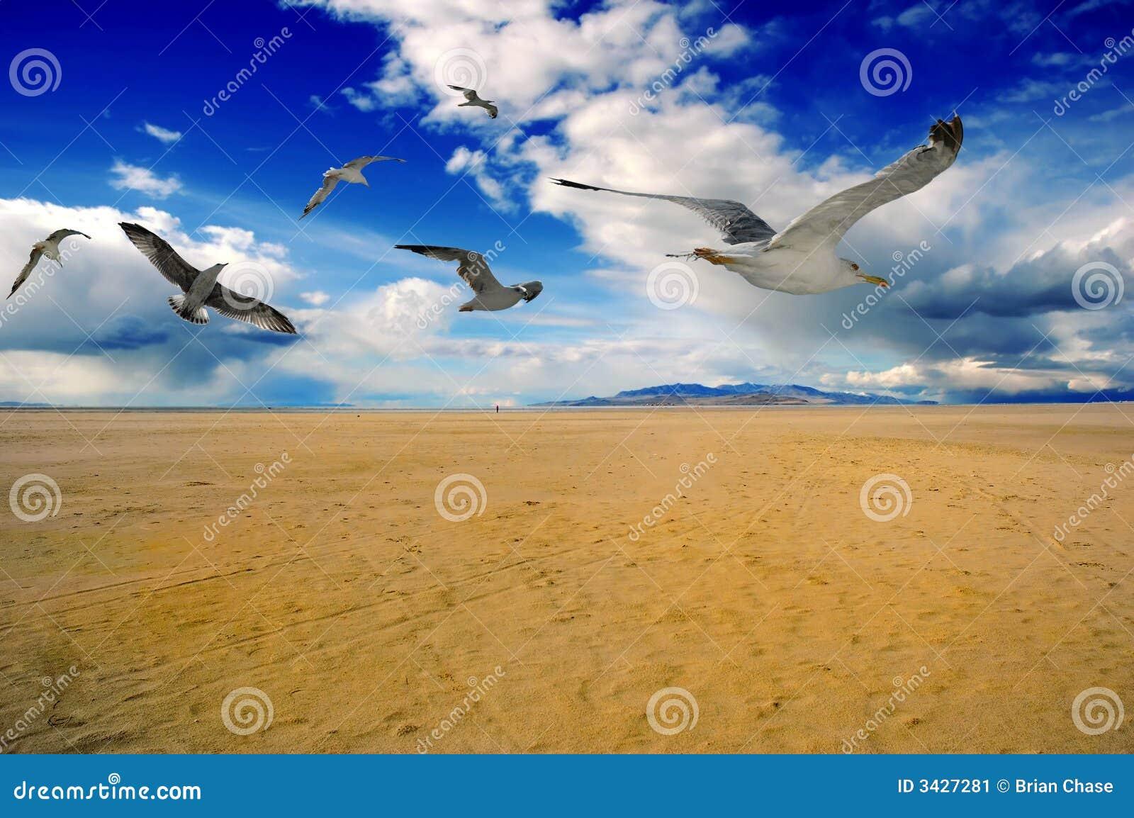 Download Birds stock image. Image of deserted, bird, background - 3427281