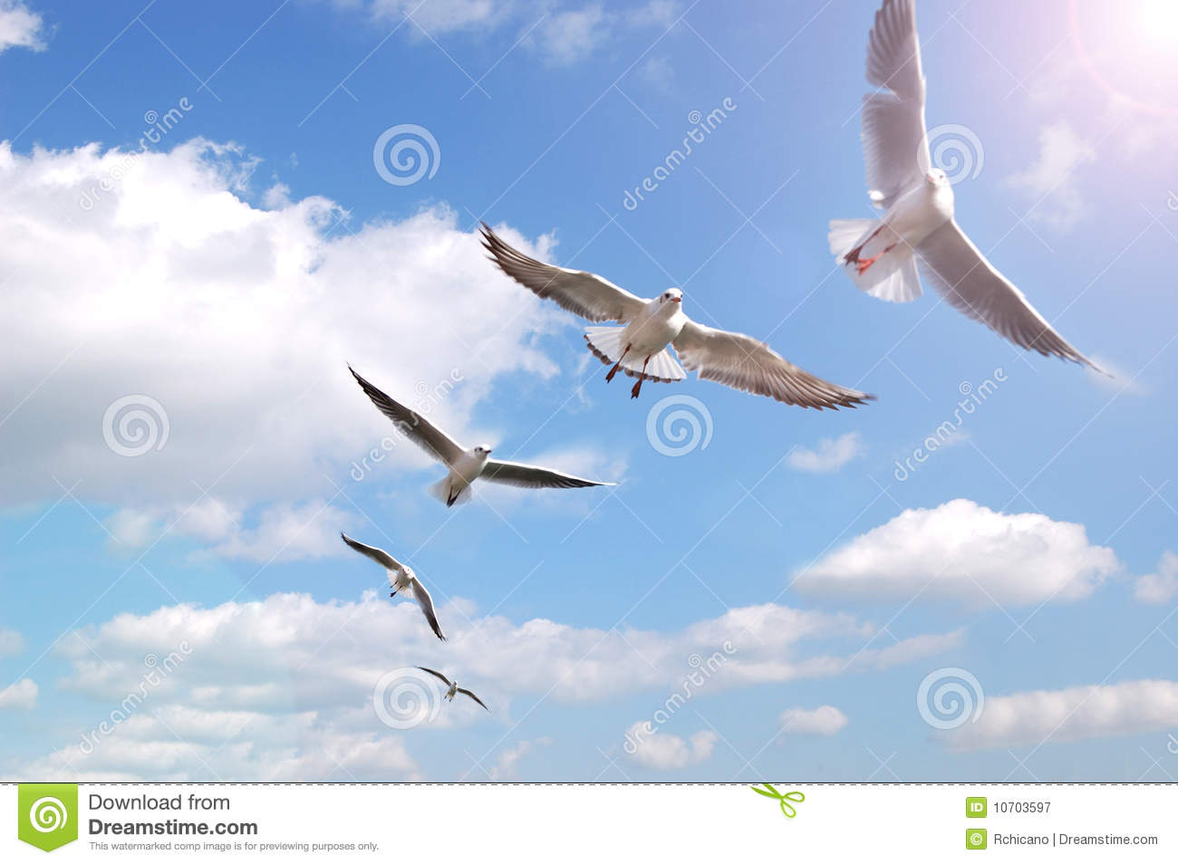 Flying Birds Free Stock Photos Download 3 416 Free Stock: Birds On Air Stock Image. Image Of Leadership, Cloud