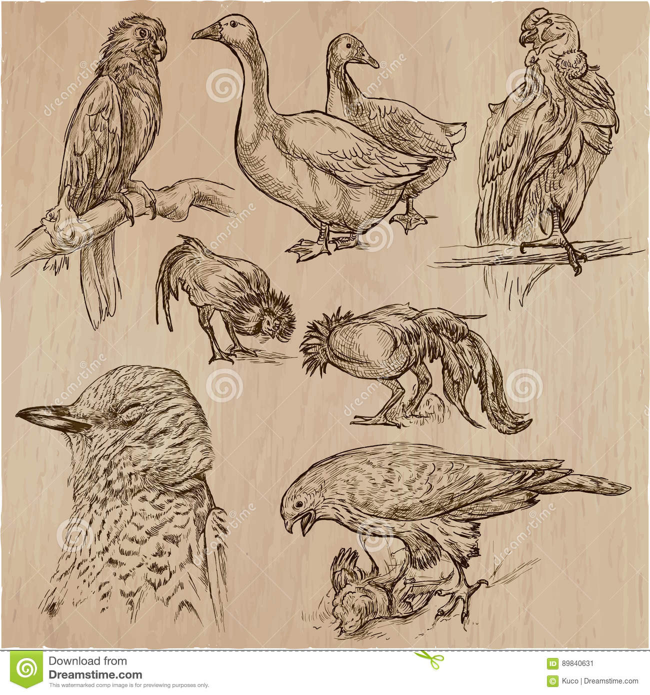Drawing Lines Freehand : Birds animals around the world an hand drawn vector