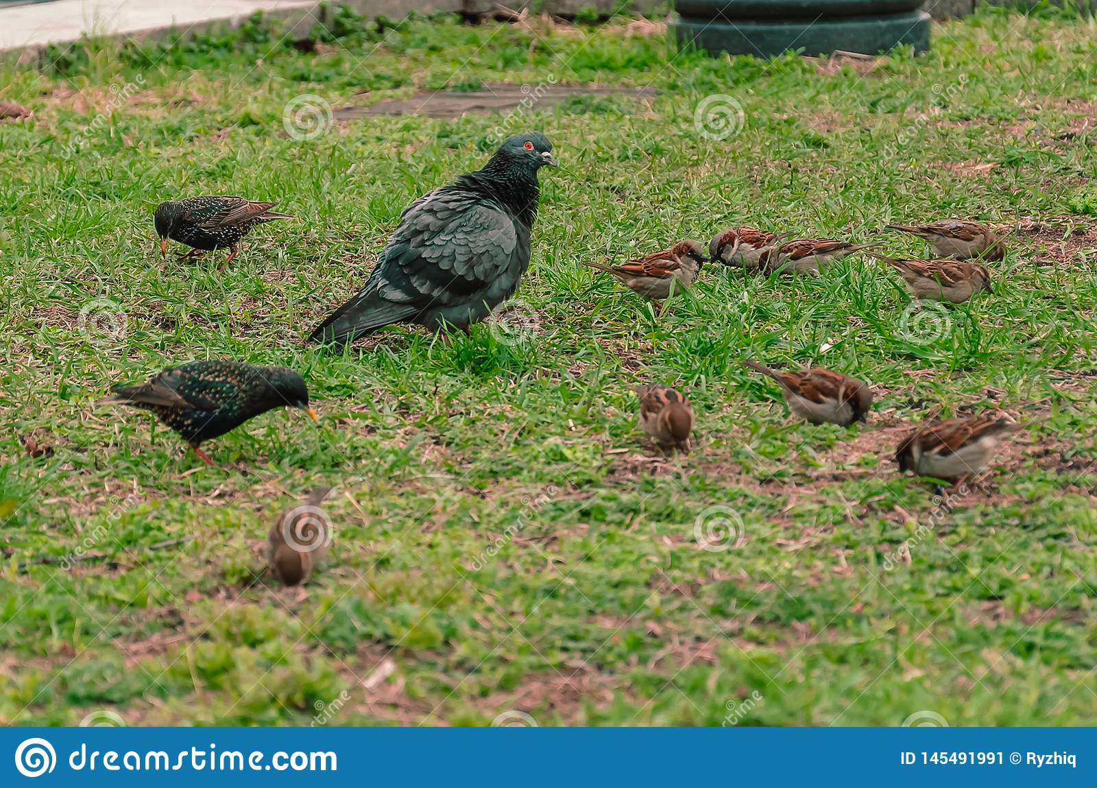 Birds on the background of green grass