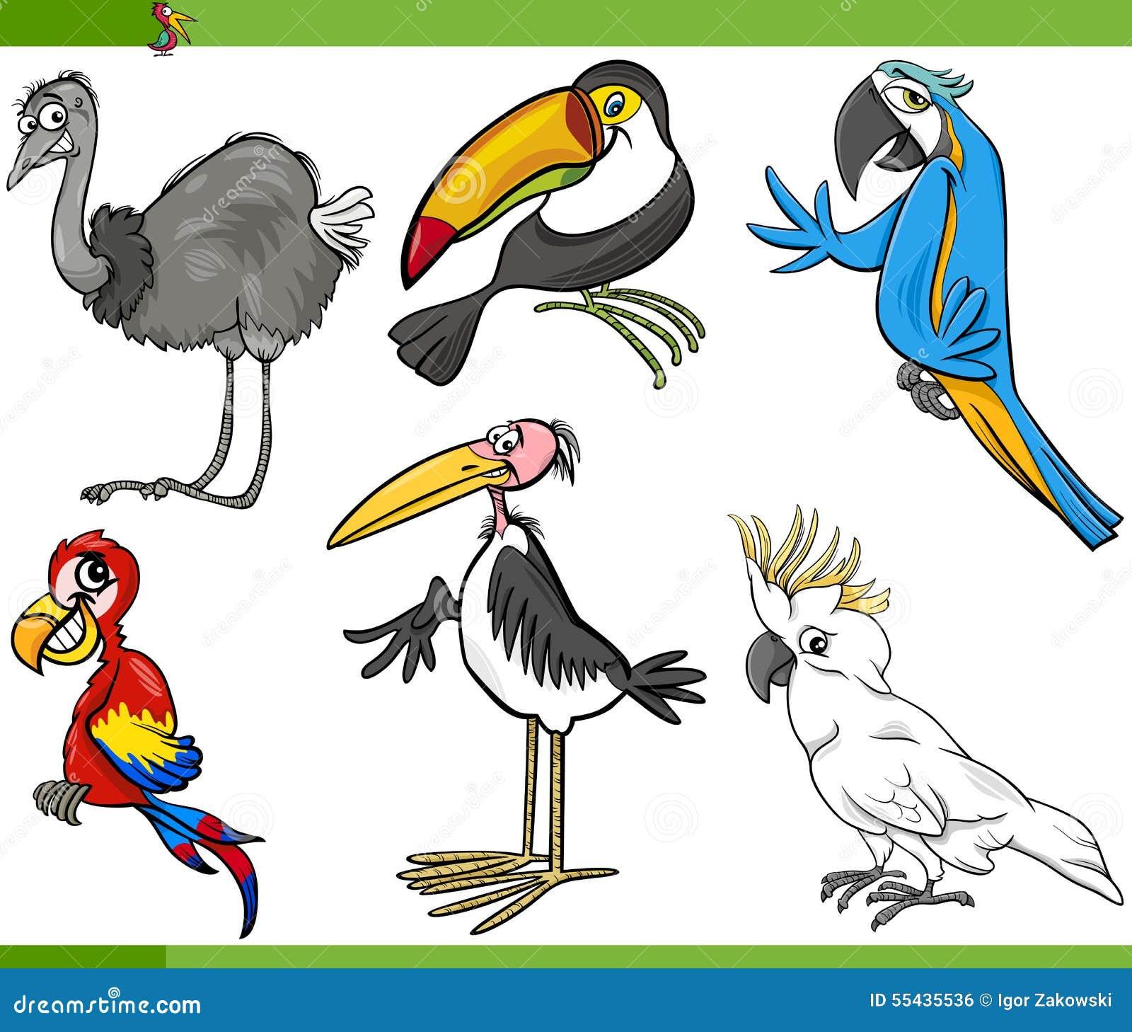 Cartoon birds collection set vector