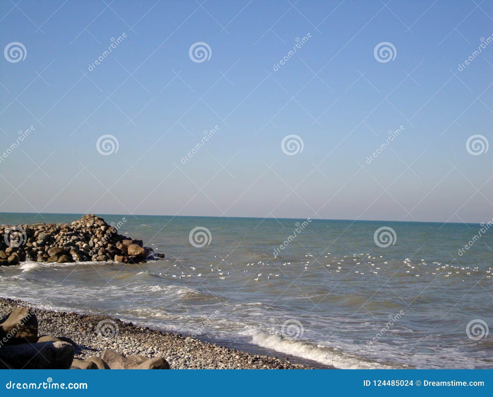 Birds in the caspian sea