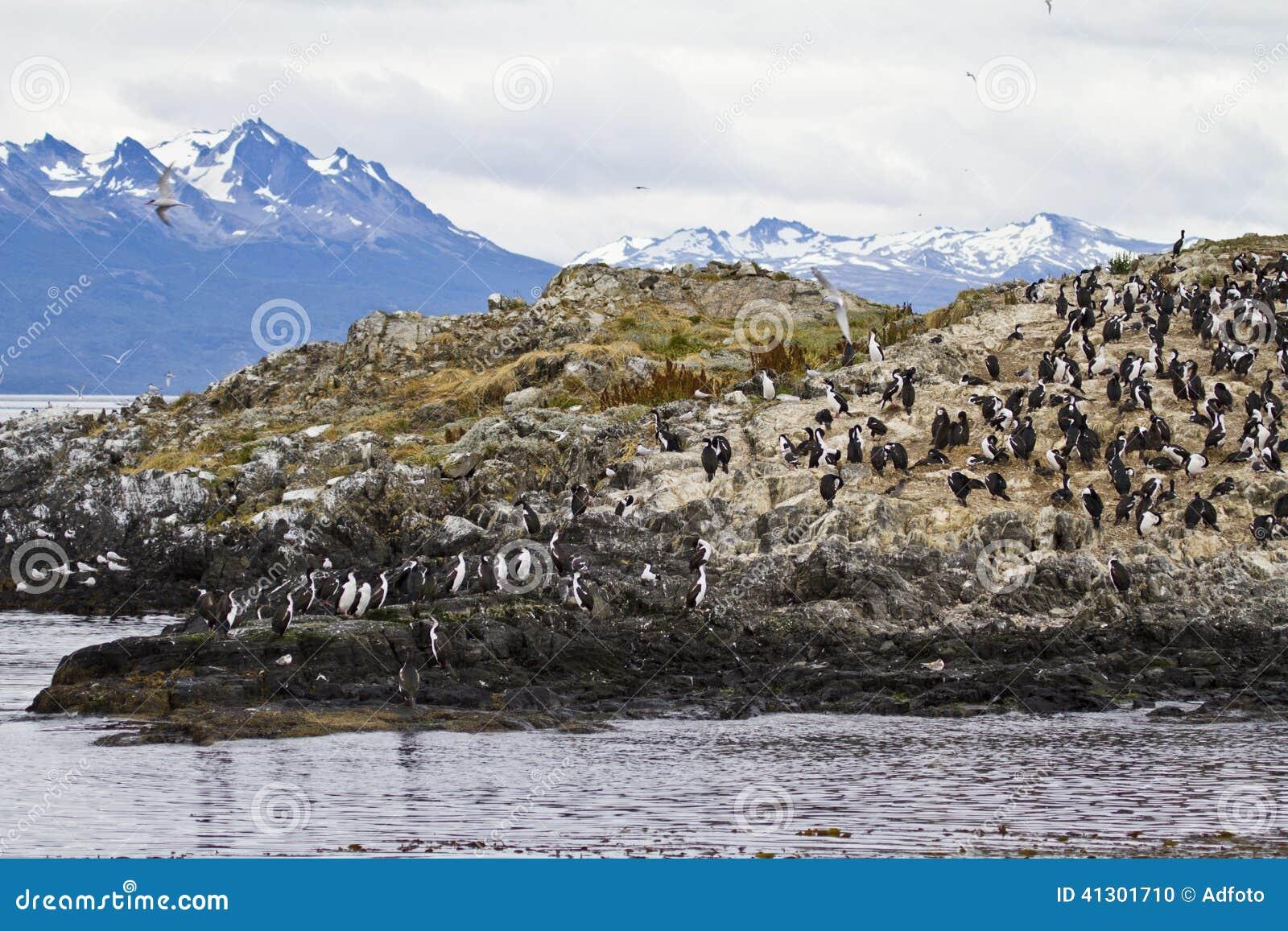 Birds - Cormorant Colony