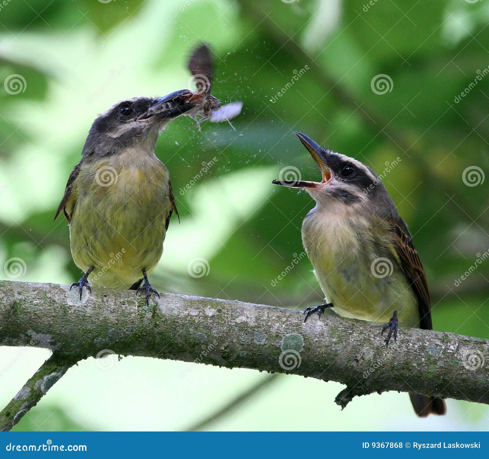 Birds Eating A Moth (4...