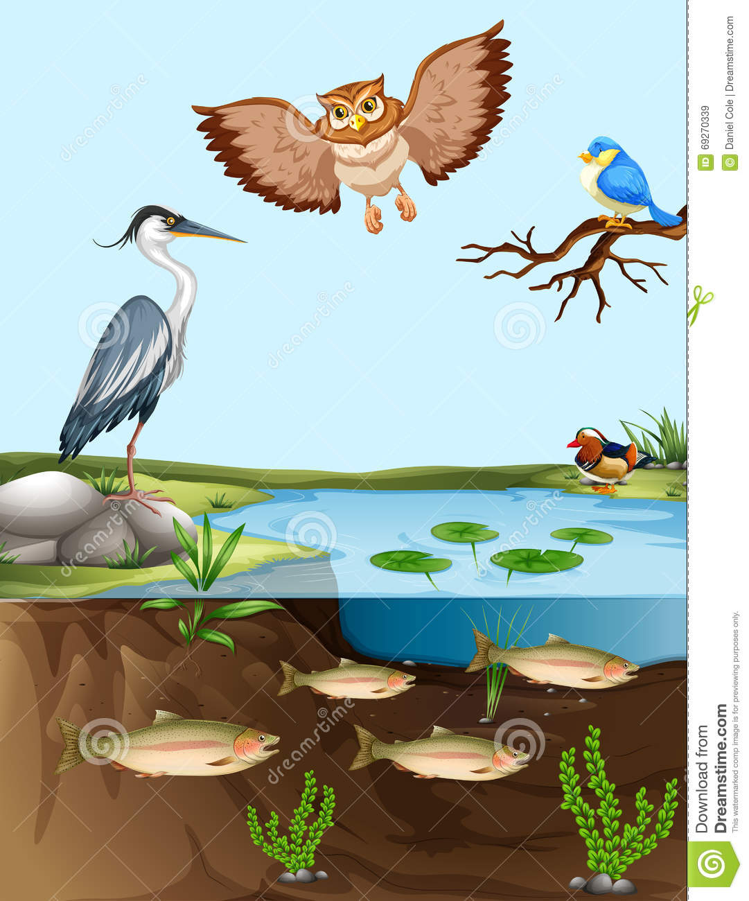 Birds and fish by the pond