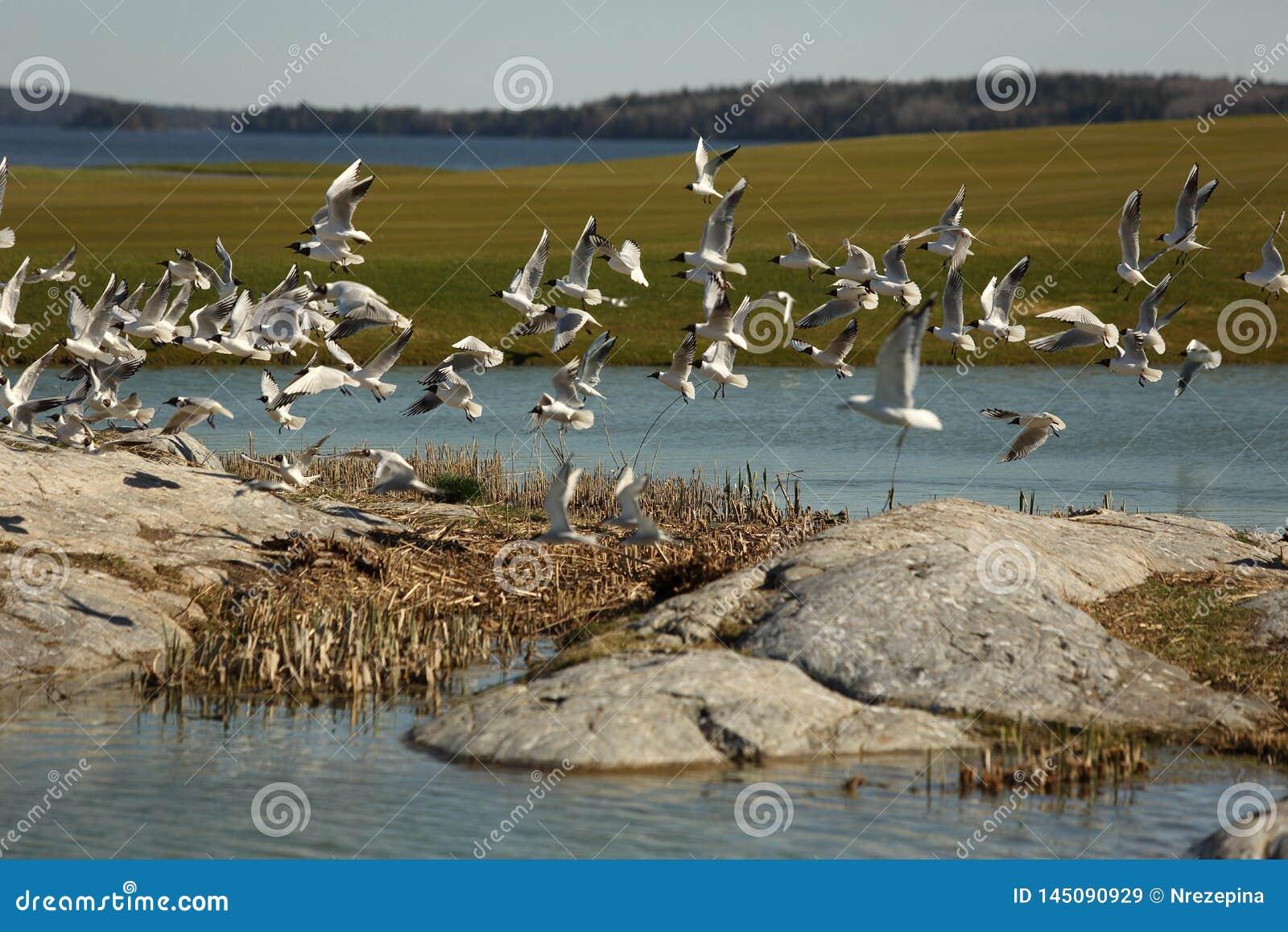 Birds fly over the golf course