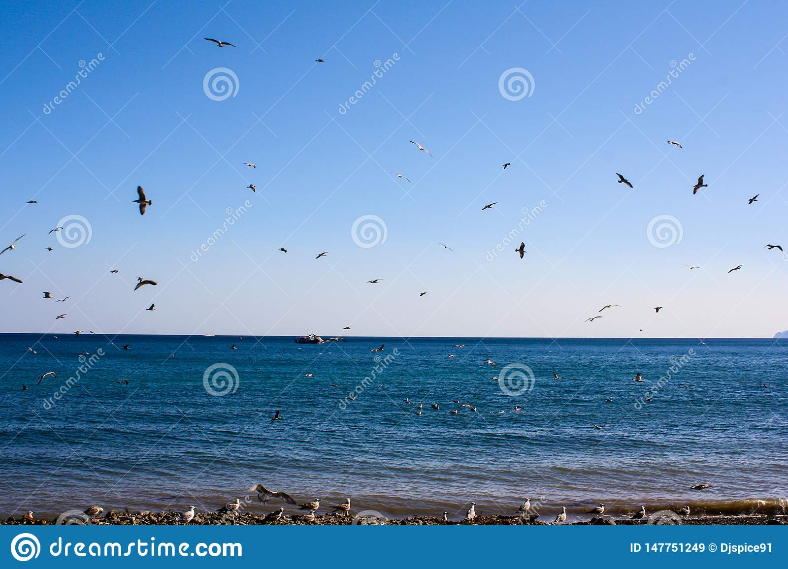 Birds fly by the sea