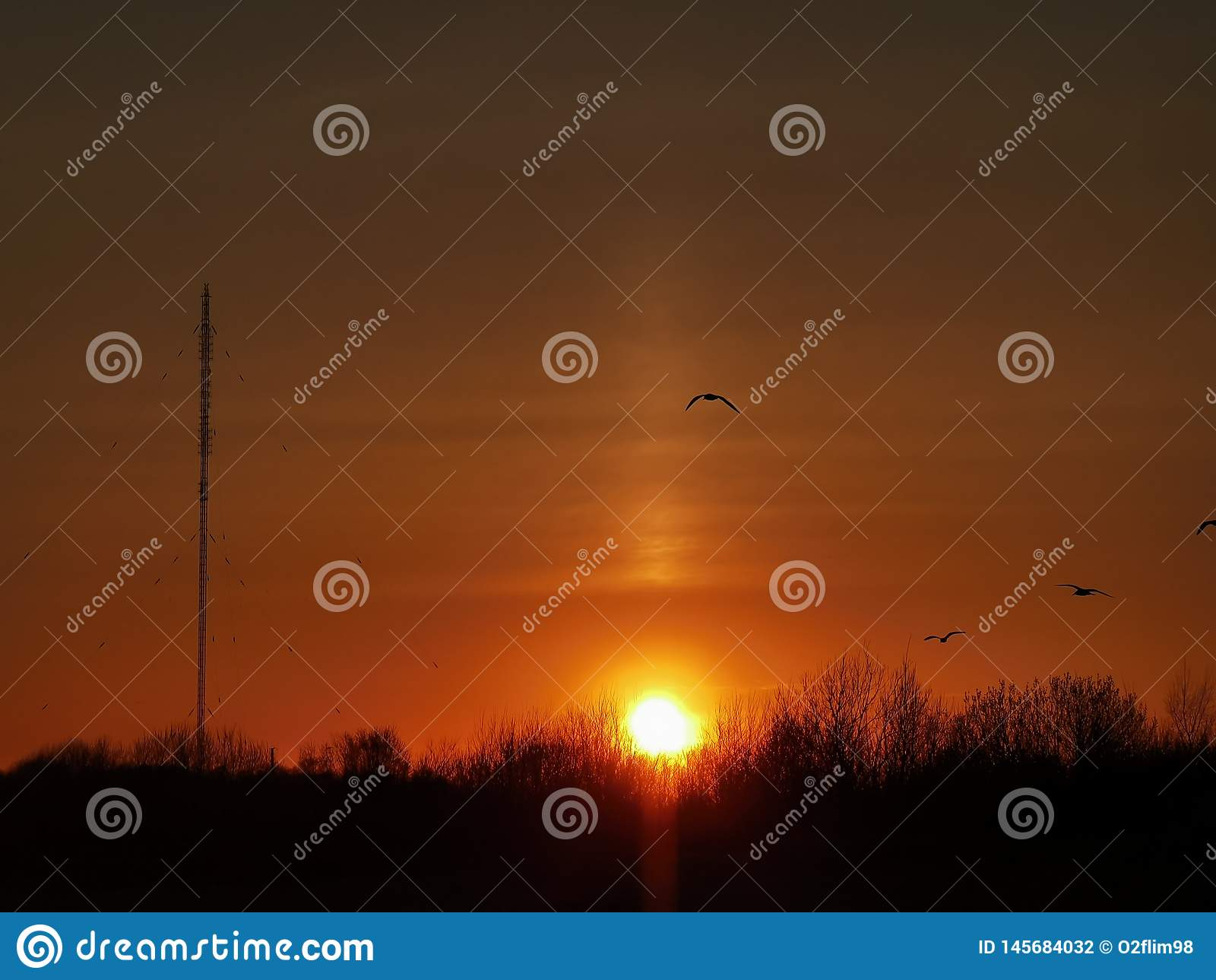 Birds fly through sunset