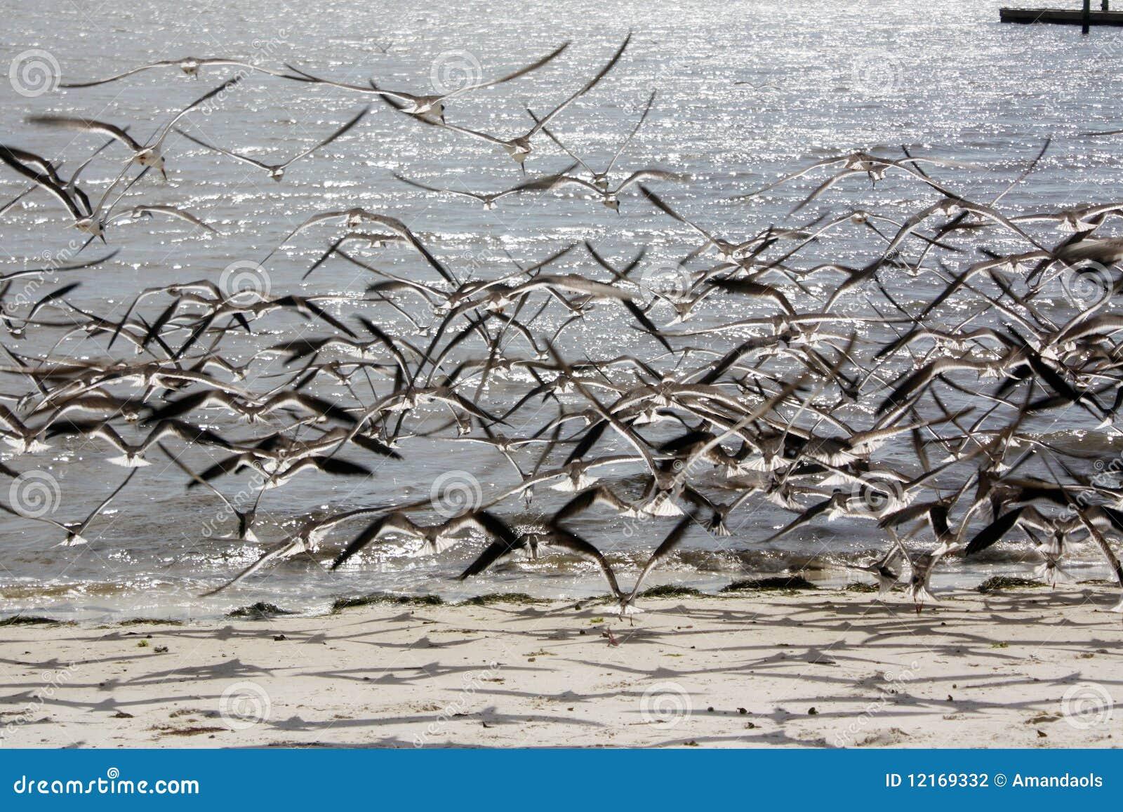 Stock Photography Birds Flying Image12169332