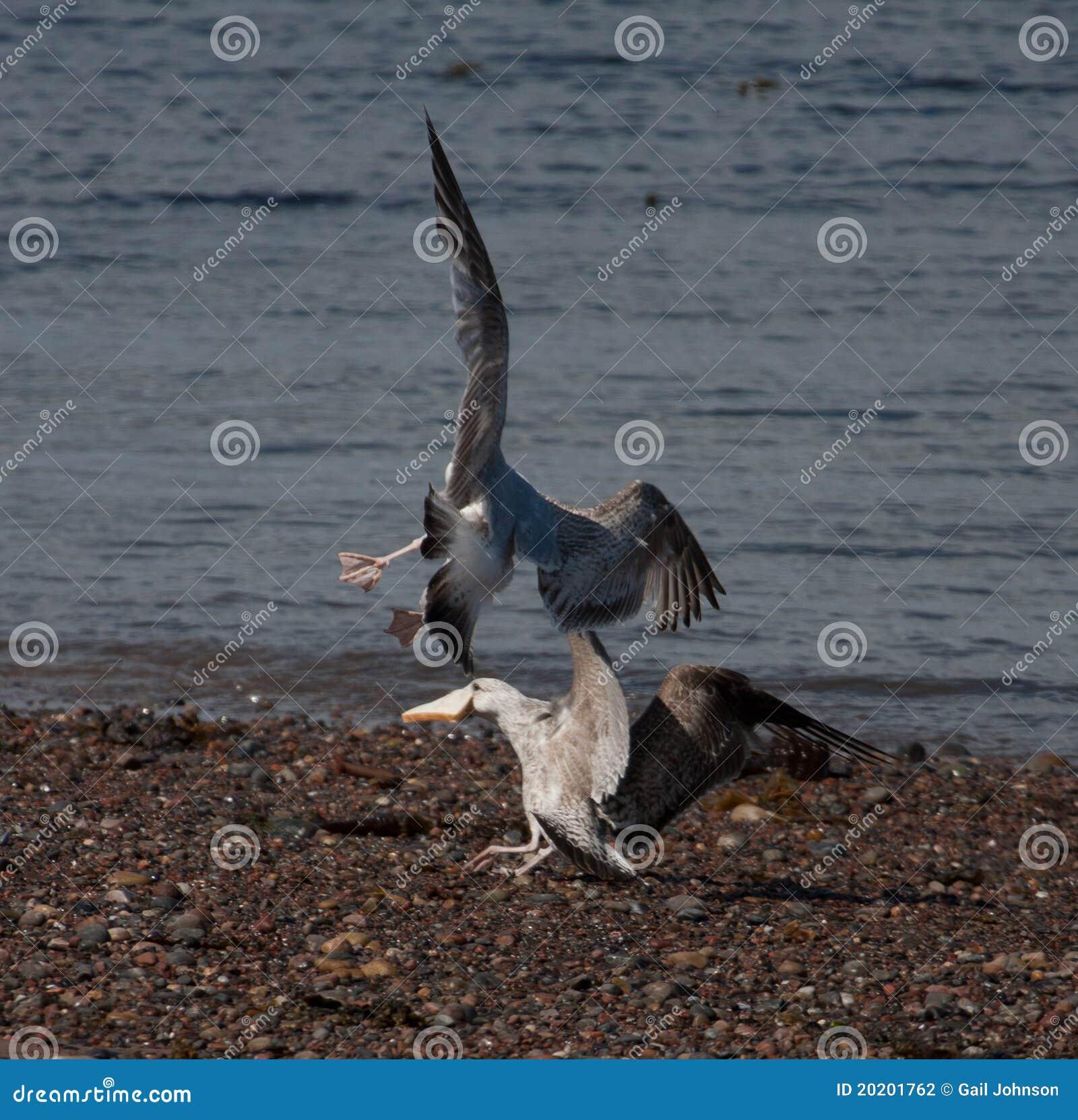 Stock Photography Birds Flying Image20201762