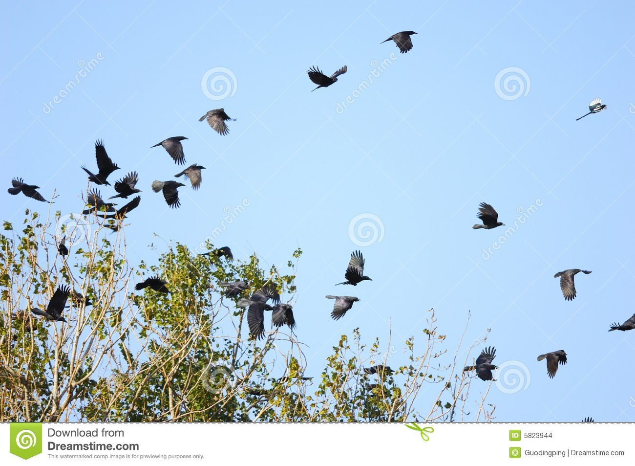 Flying Birds Free Stock Photos Download 3 416 Free Stock: Birds Flying Stock Photo. Image Of Branches, Flock, Branch
