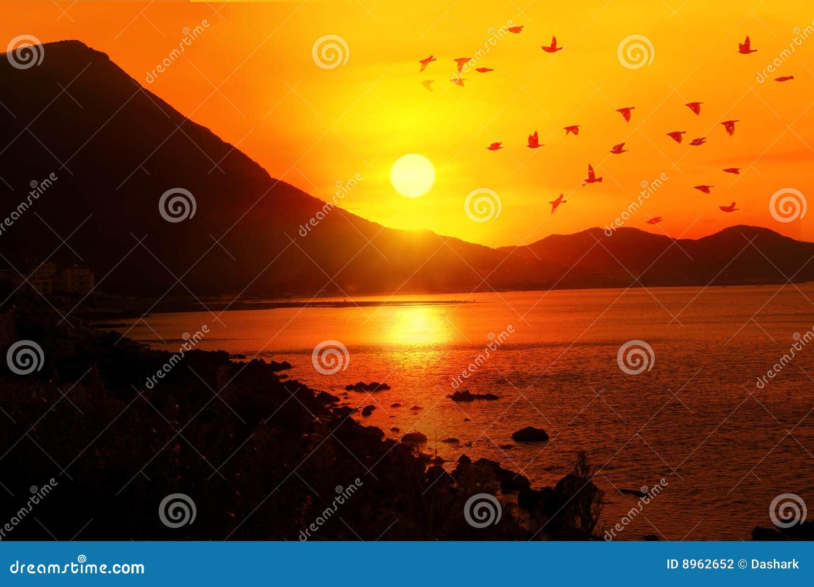 Stock Photography Birds Flying Image8962652