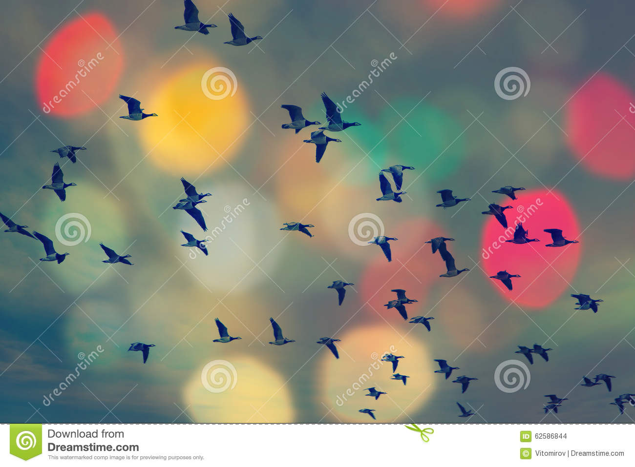 Birds flying and abstract sky ,spring background abstract happy background,freedom birds concept,symbol of liberty