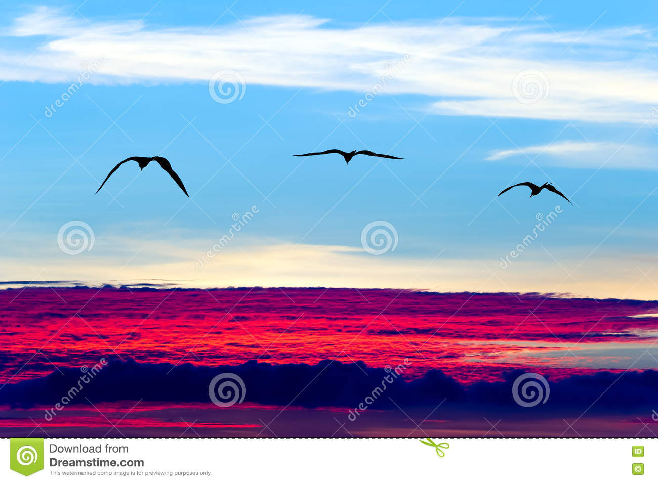 Flying Birds Free Stock Photos Download 3 416 Free Stock: Birds Flying Silhouettes Stock Images