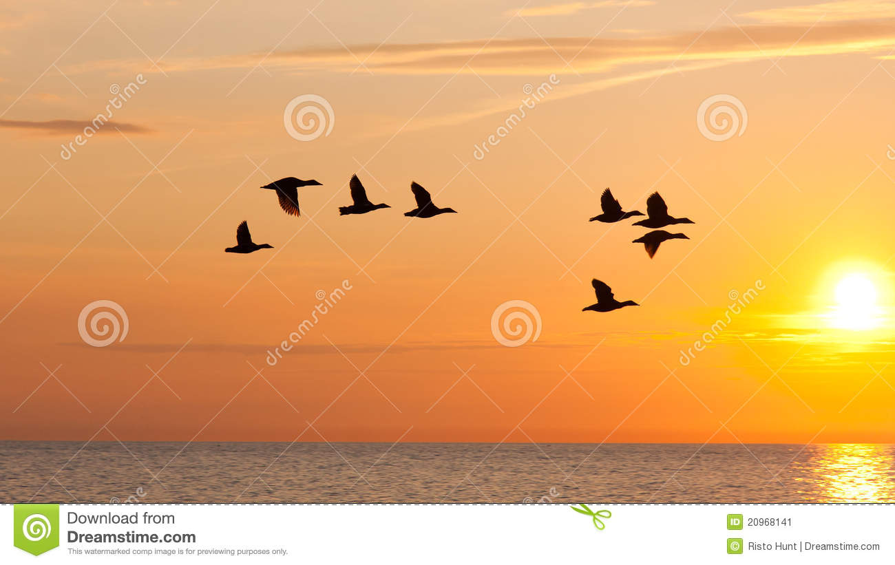 birds fly in the sky at sunset stock photo 20968141 megapixl