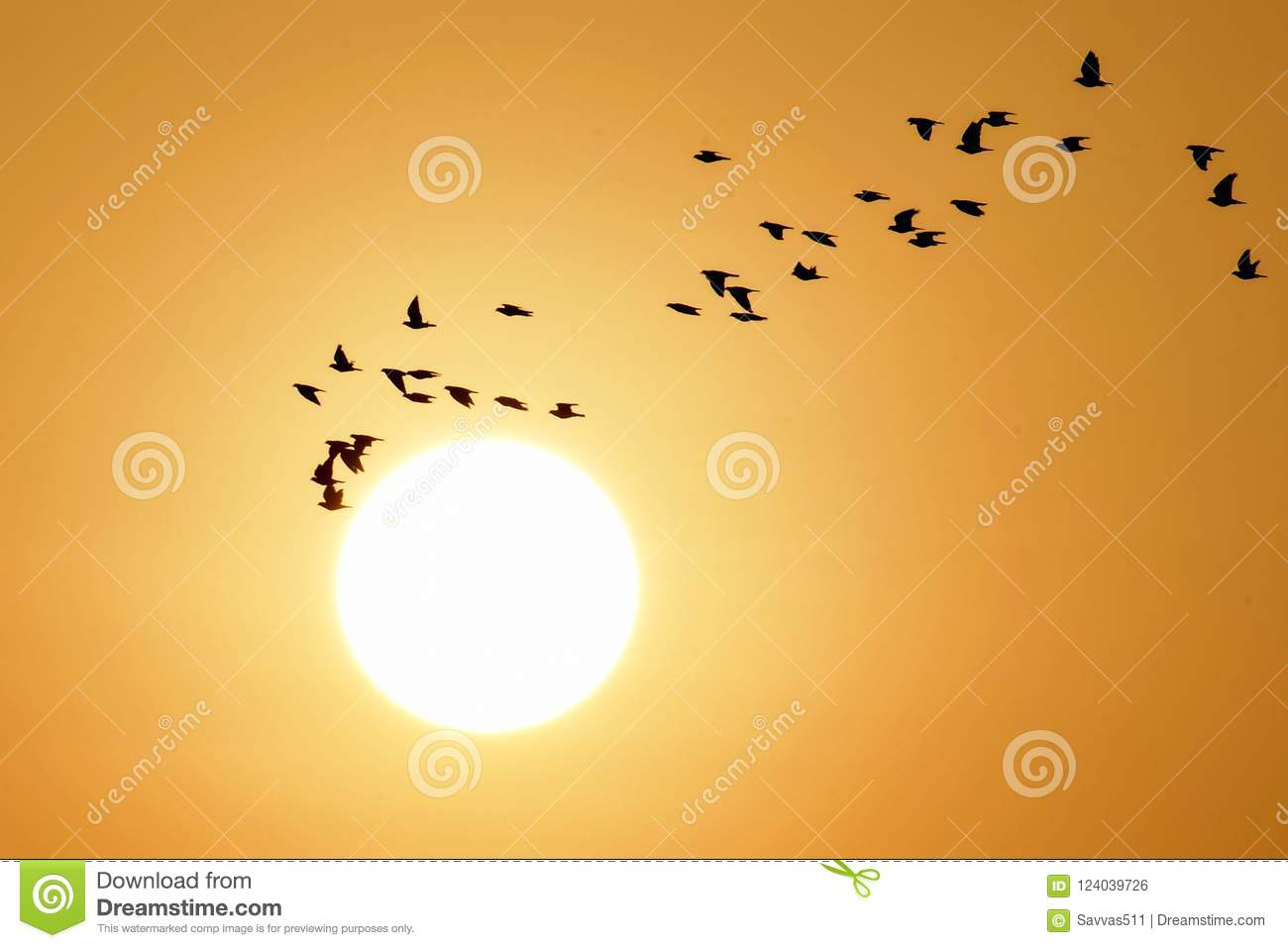 Birds Flying At Sunrise As The Sun Rises Stock Photo - Image of gold ...