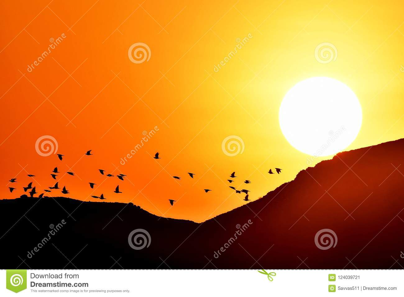 Birds Flying At Sunrise As The Sun Rises Stock Image - Image of ...