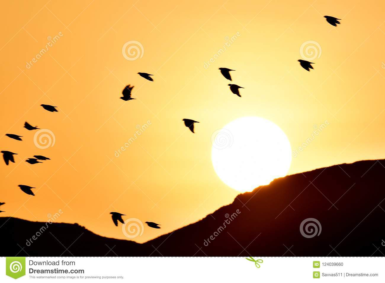 Birds Flying At Sunrise As The Sun Rises Over The Sand Mountains ...