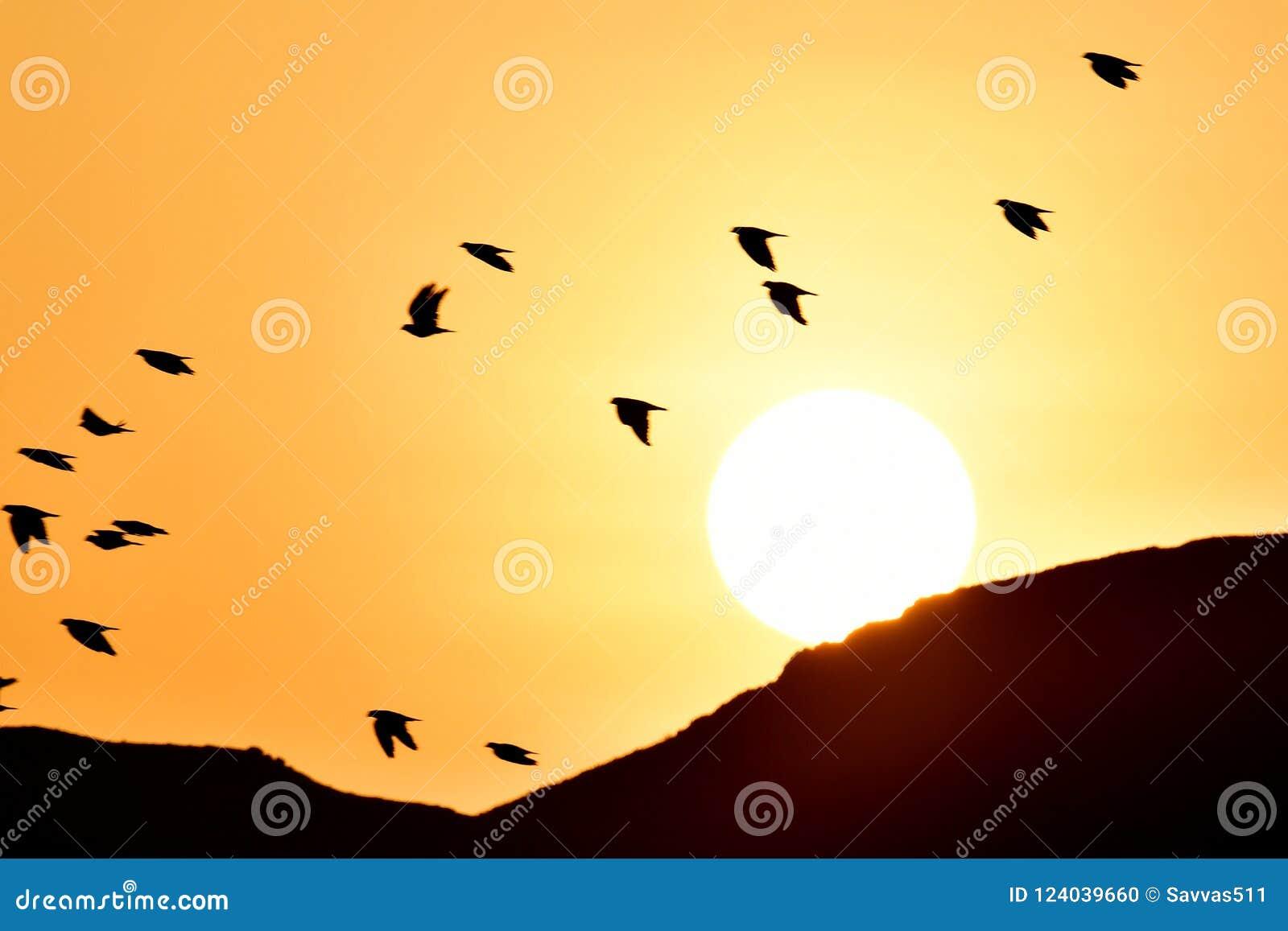 Abstract Birds In Flight Wall Art