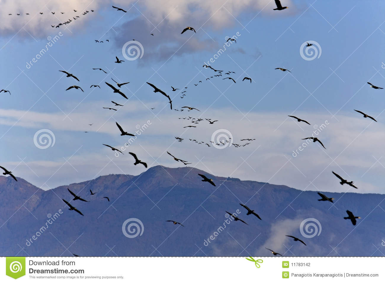 Stock Photography Birds Flying To Warmer Areas Image11783142