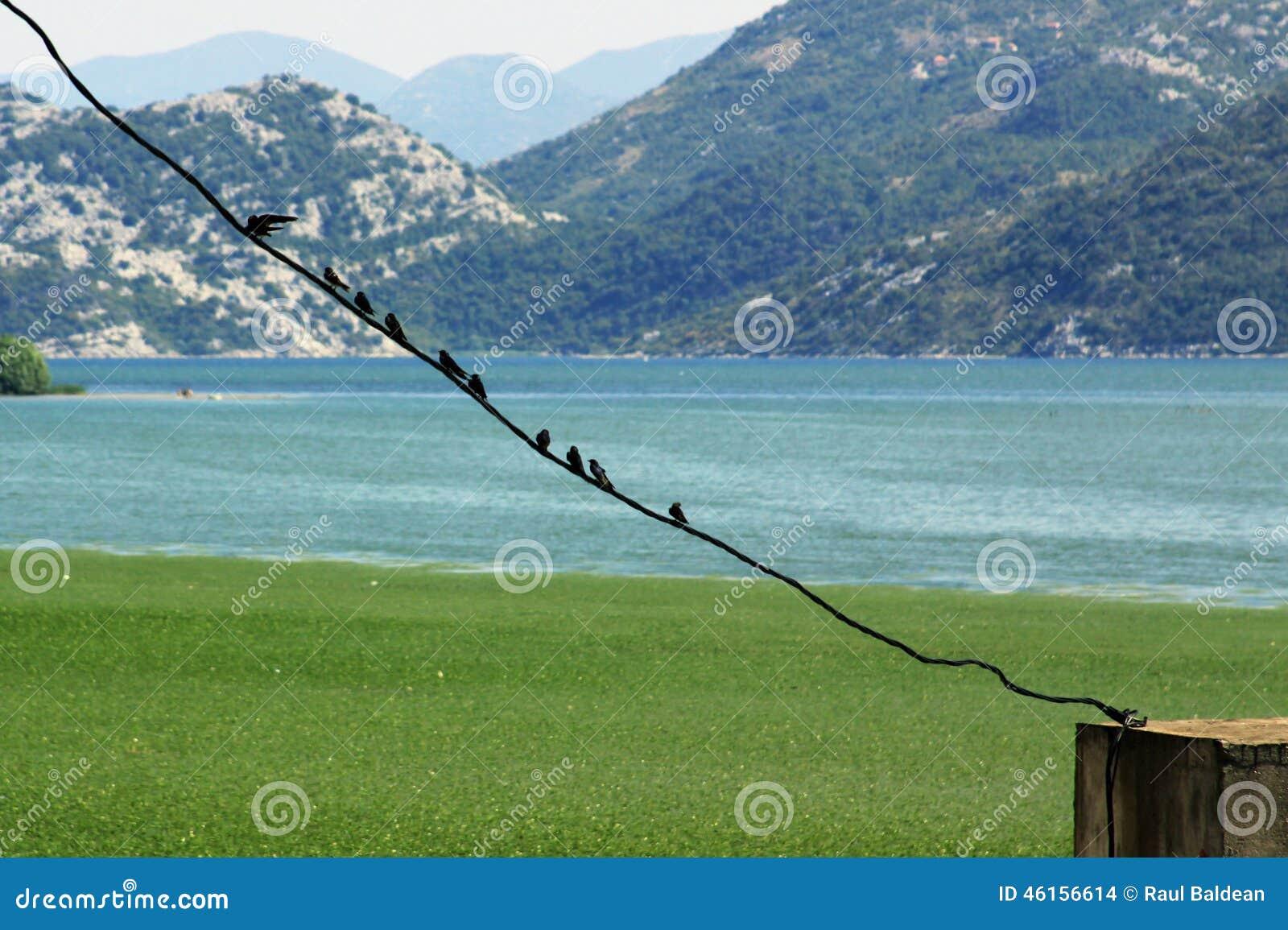 Birds on a line at Skadarsko Jezero swamp