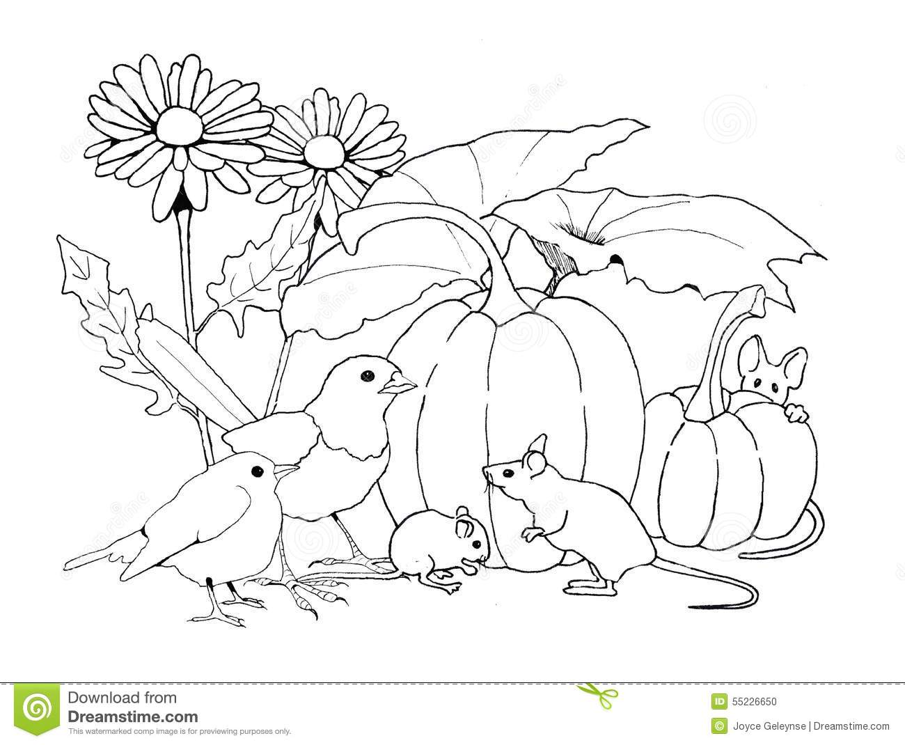 birds and mice with pumpkins and flowers coloring page stock