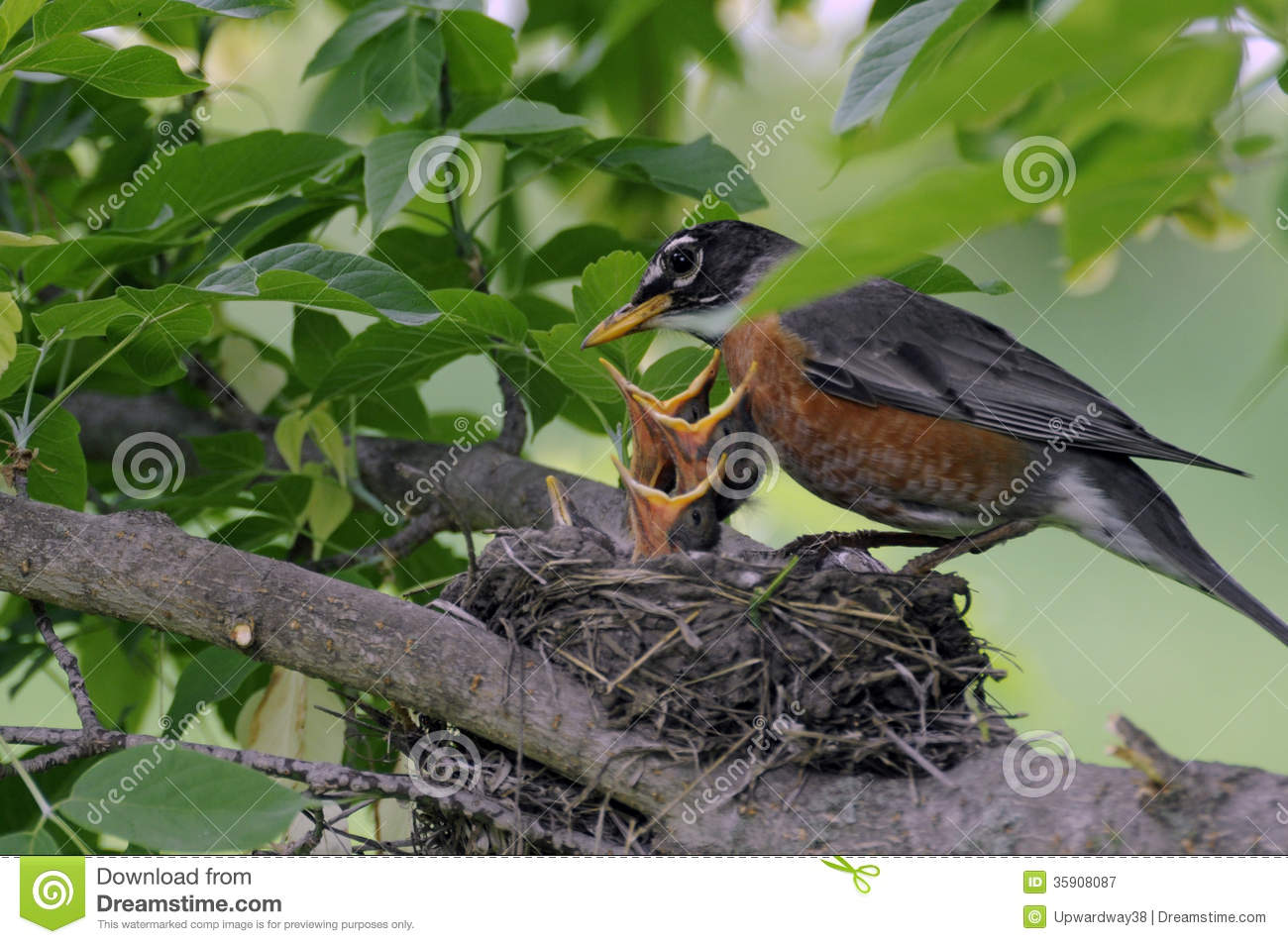how to make bird food for baby birds