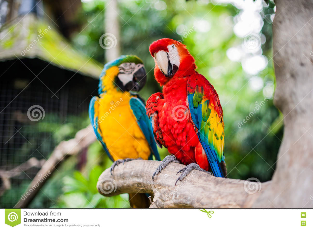 Birds In The Museum Blanco, Bali Stock Photo - Image of list