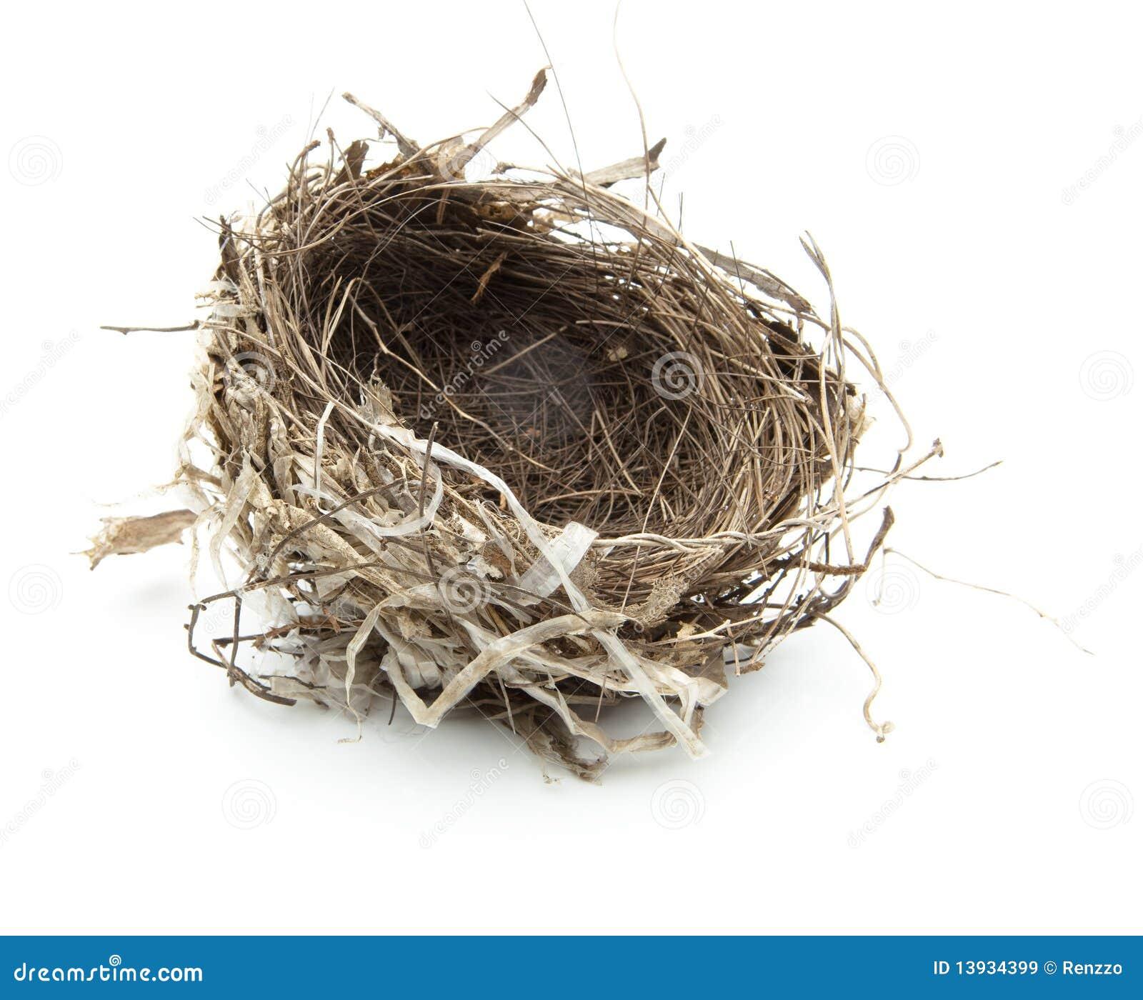 Birds nest isolated on white.