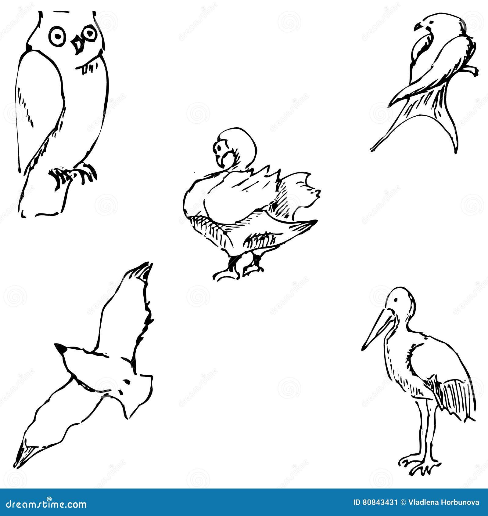 Birds pencil sketch by hand