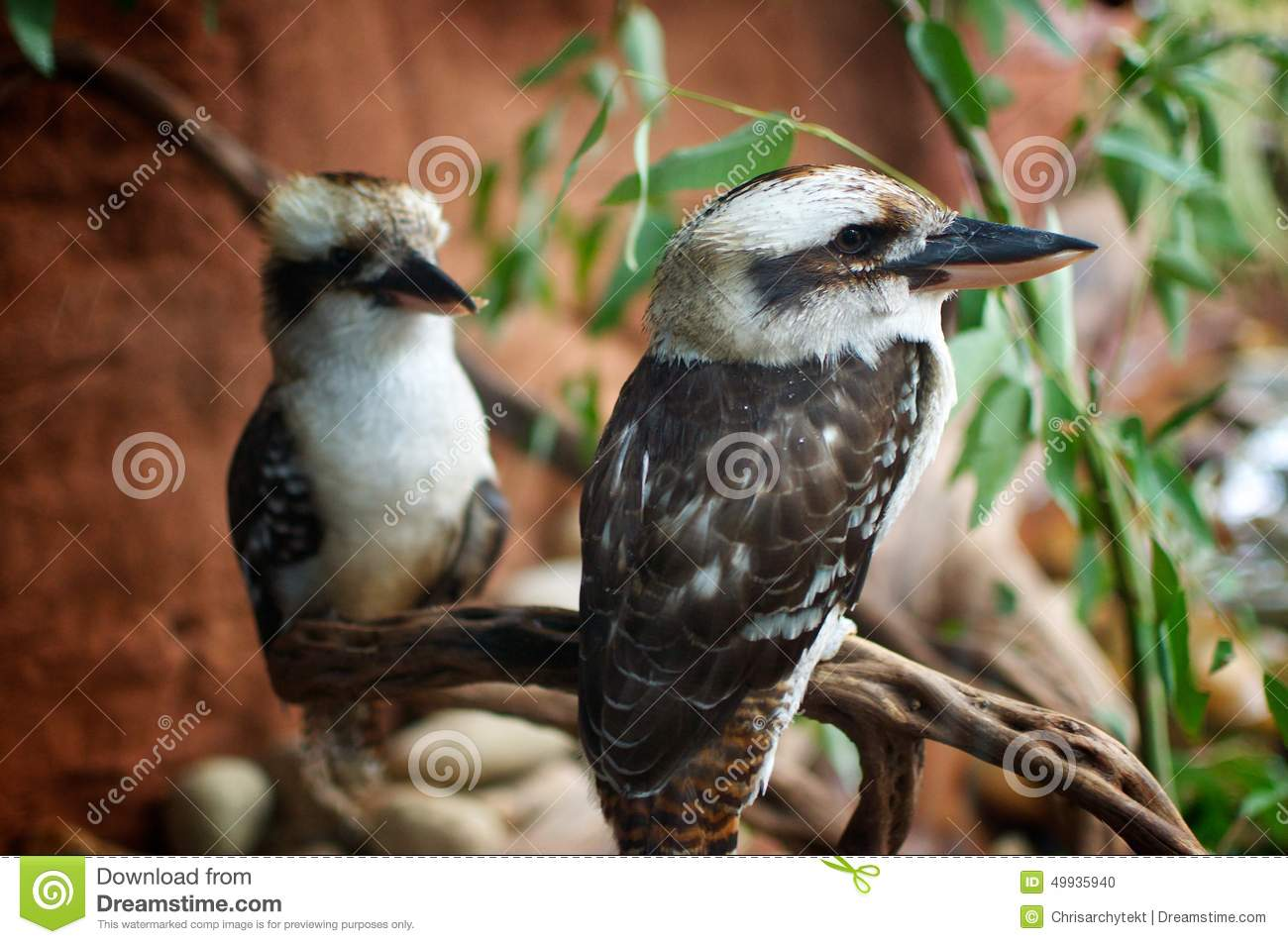 Birds Perched On Branch Stock Photo - Image: 49935940