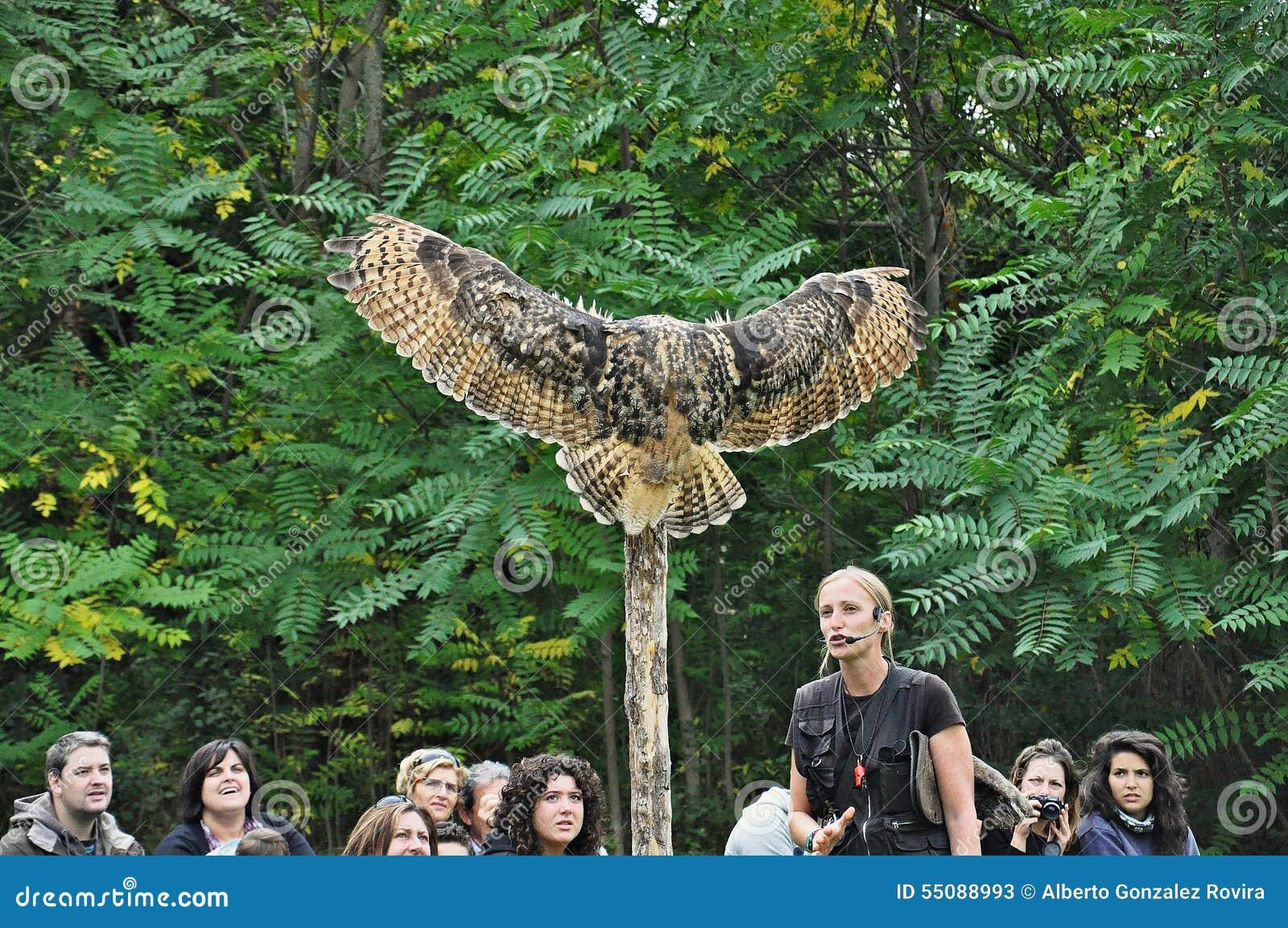 Birds of prey exhibition
