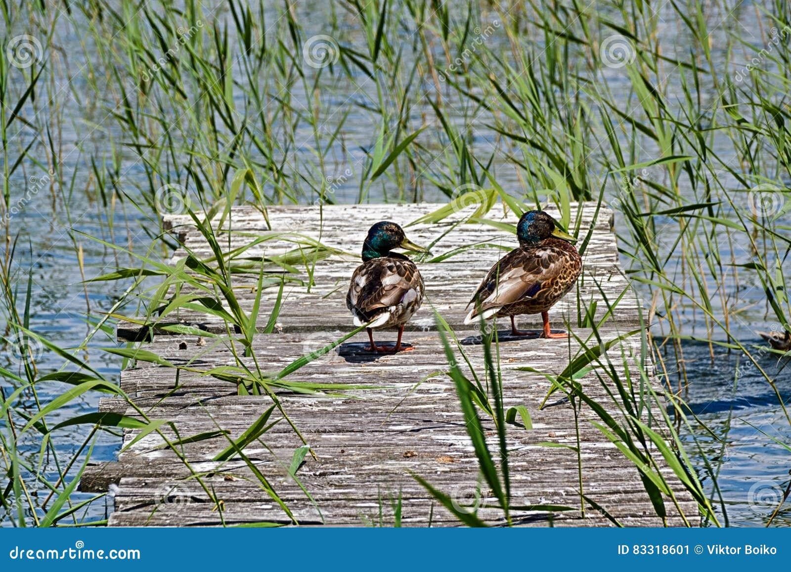 Birds recreation on the berth