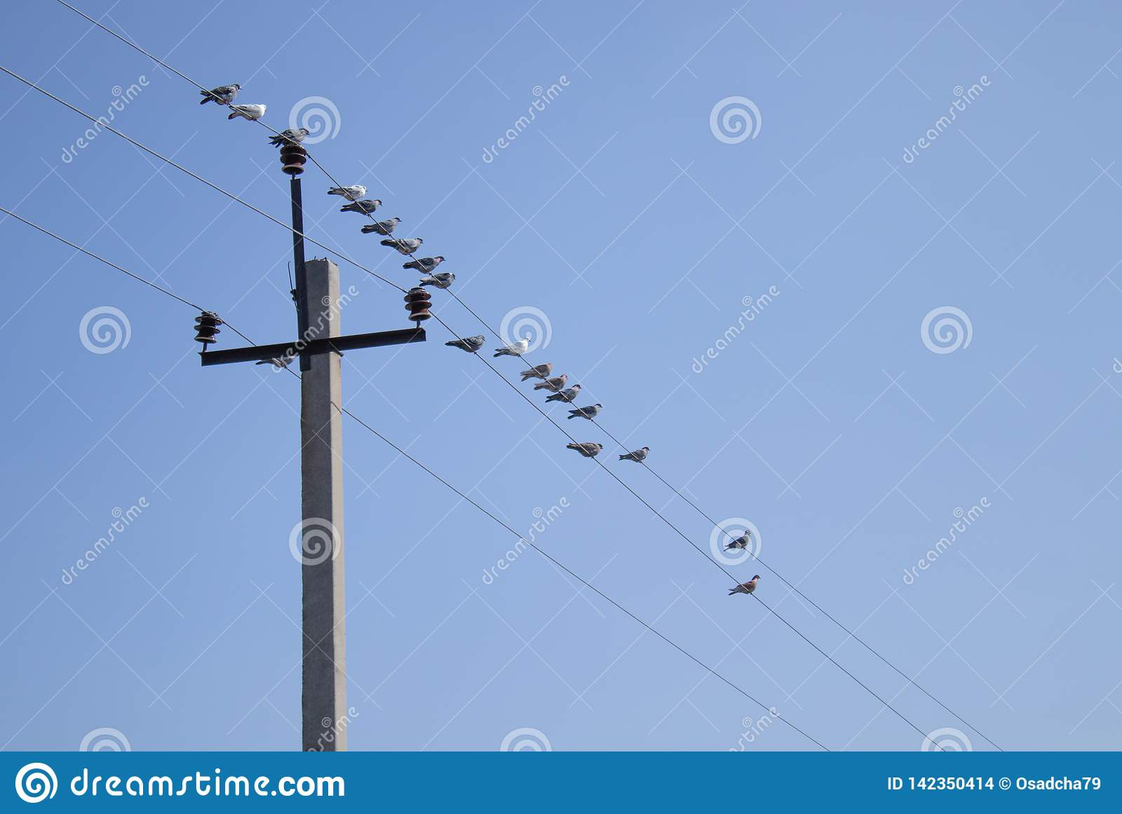 Birds Are Sitting On Wires Near The Pillar Stock Photo ... on