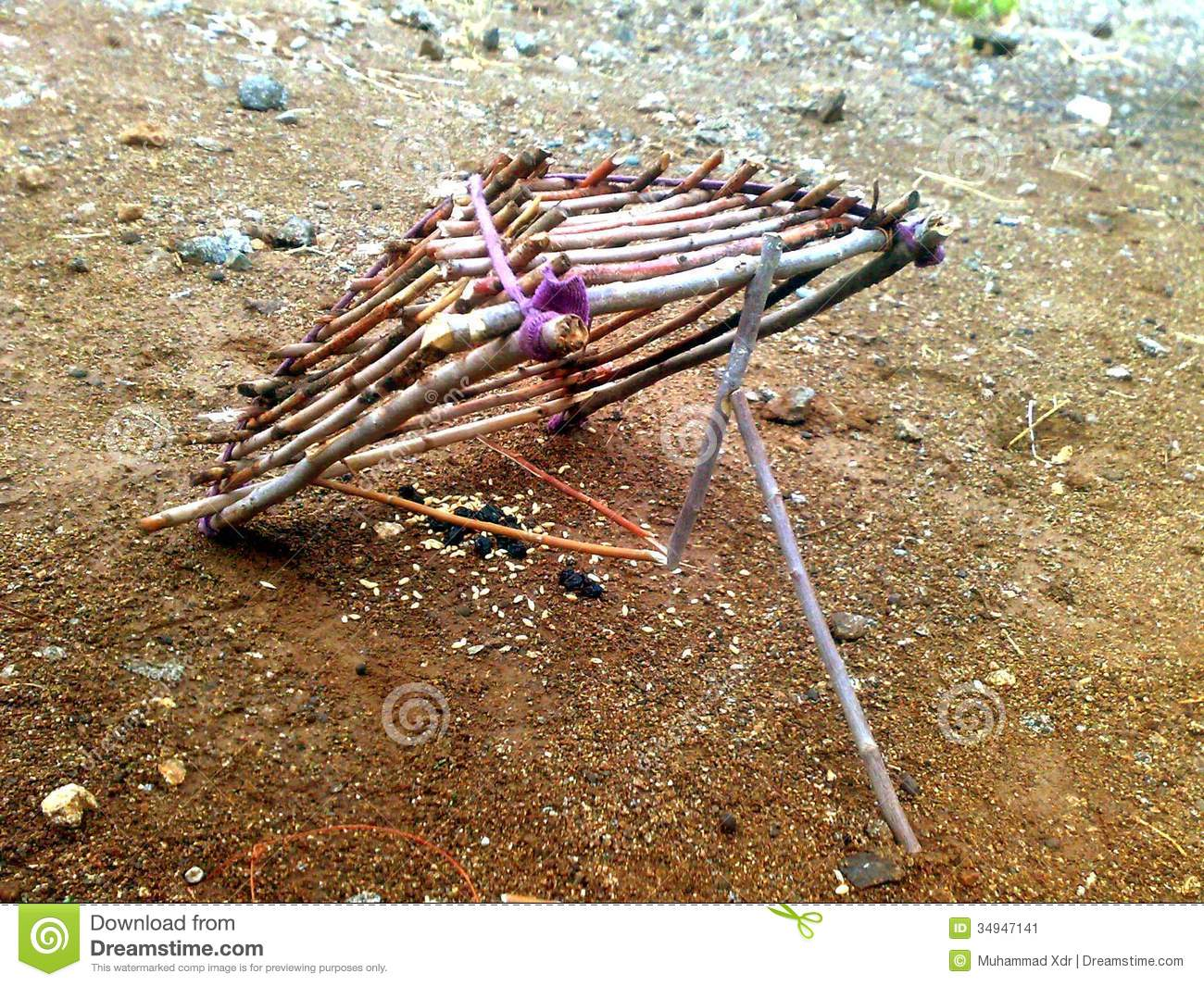 Birds Trap Stock Image - Image: 34947141