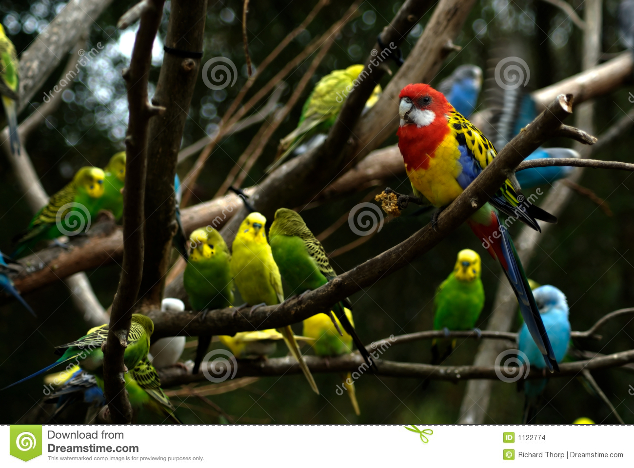 Birds in a Tree stock photo. Image of birds, tree, feather ...