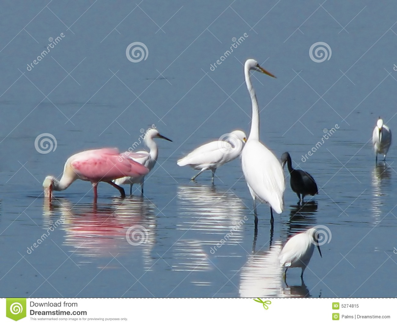 Birds wading in the water