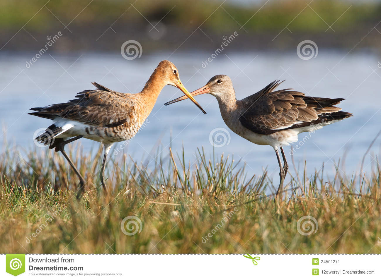 Birds in wetlands