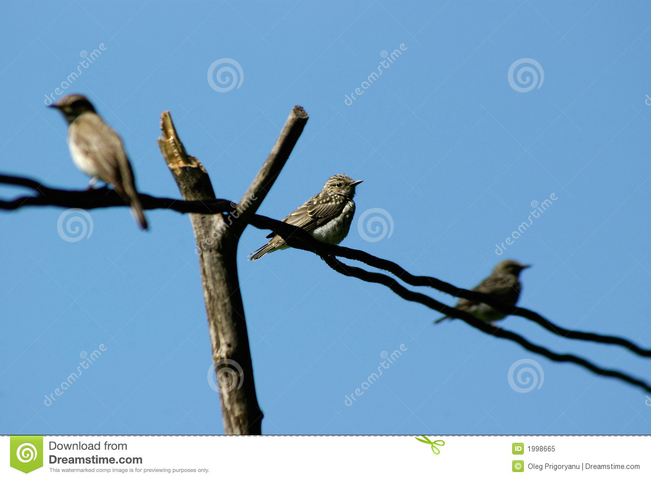 audio junkies bird on a wire download music